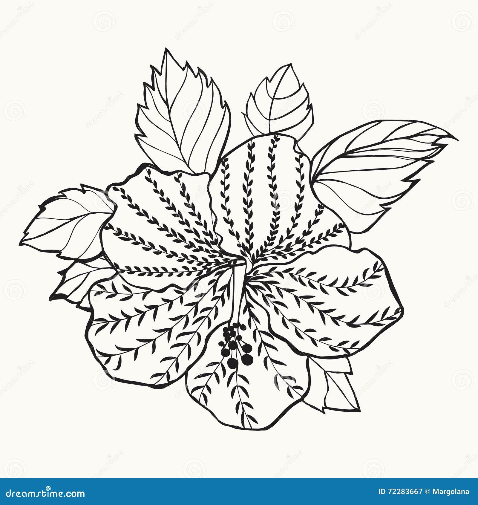 Download Цветок гибискуса Гаваи, иллюстрация лист Иллюстрация вектора - иллюстрации насчитывающей рука, изолировано: 72283667