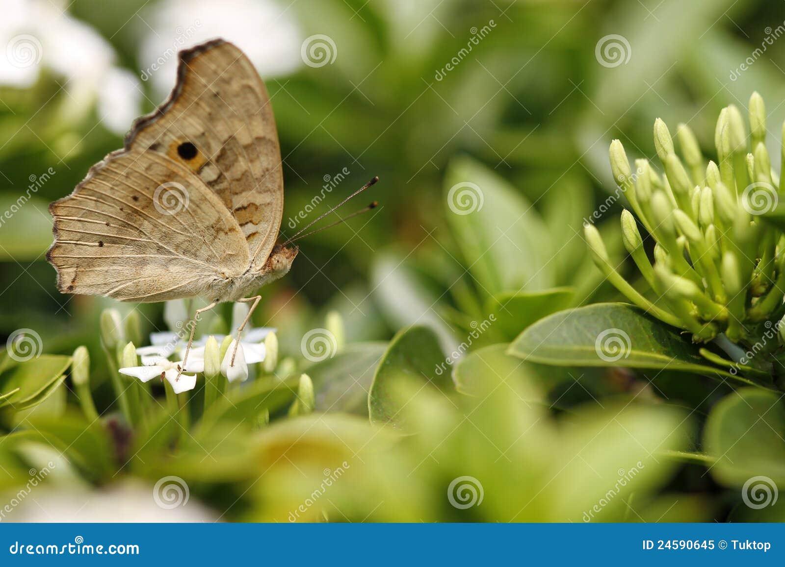 цветок красивейшей бабочки цветастый