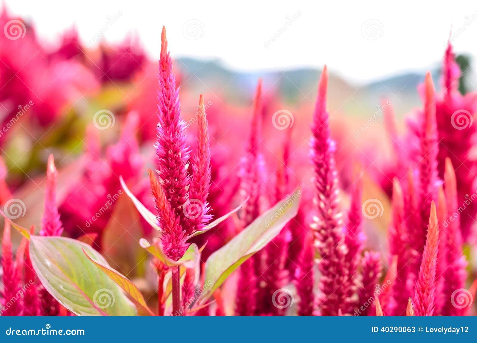 Цветок красного цвета Beautyful
