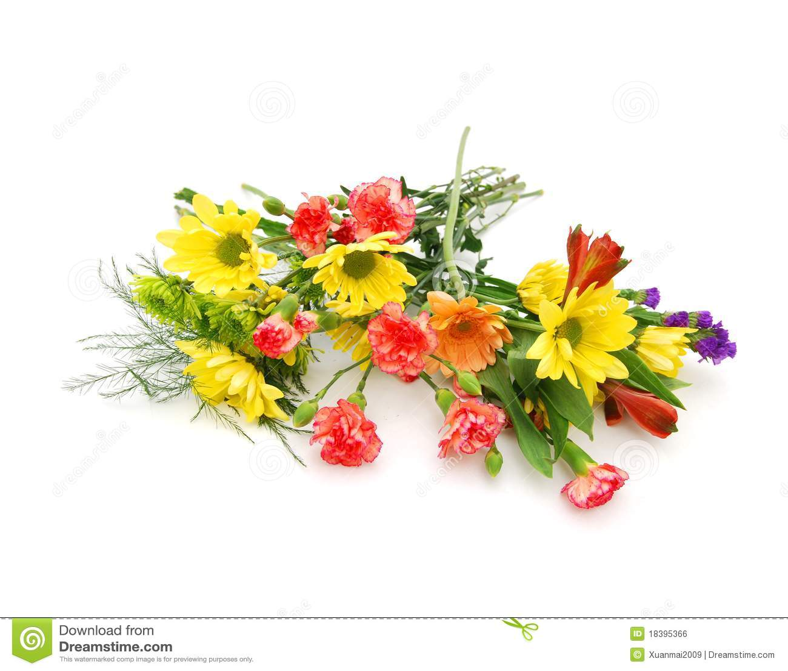 цветок красотки