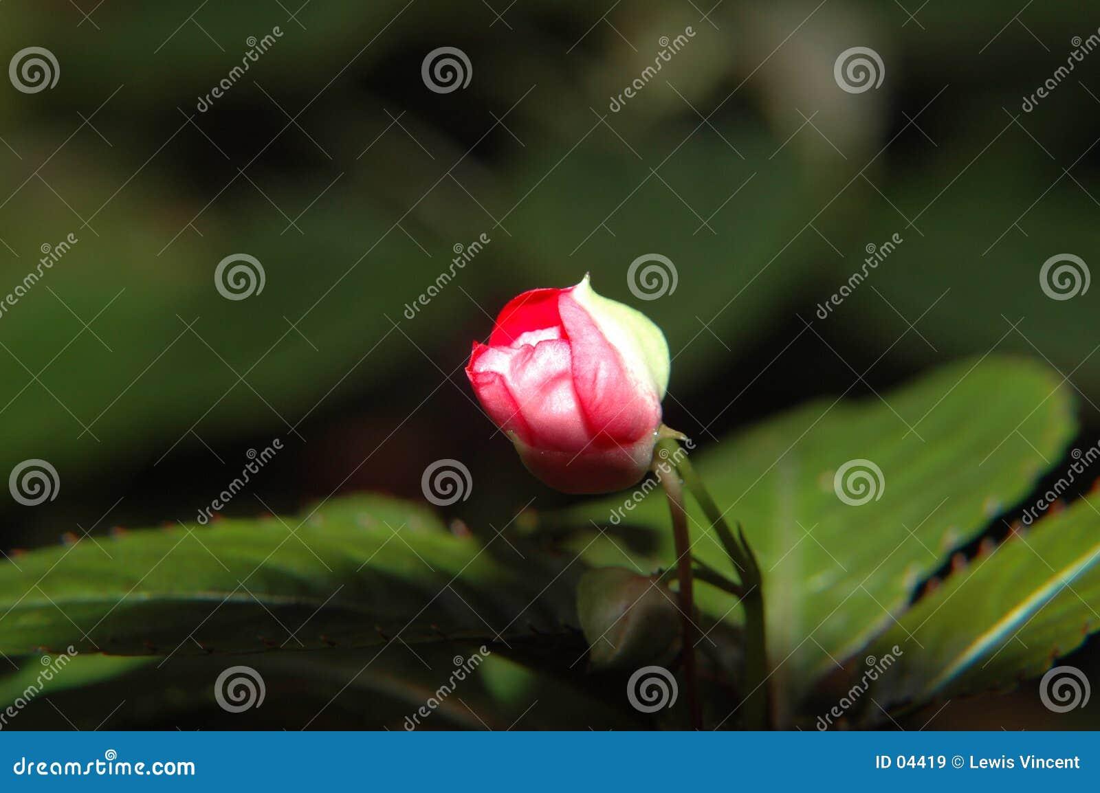 цветок к