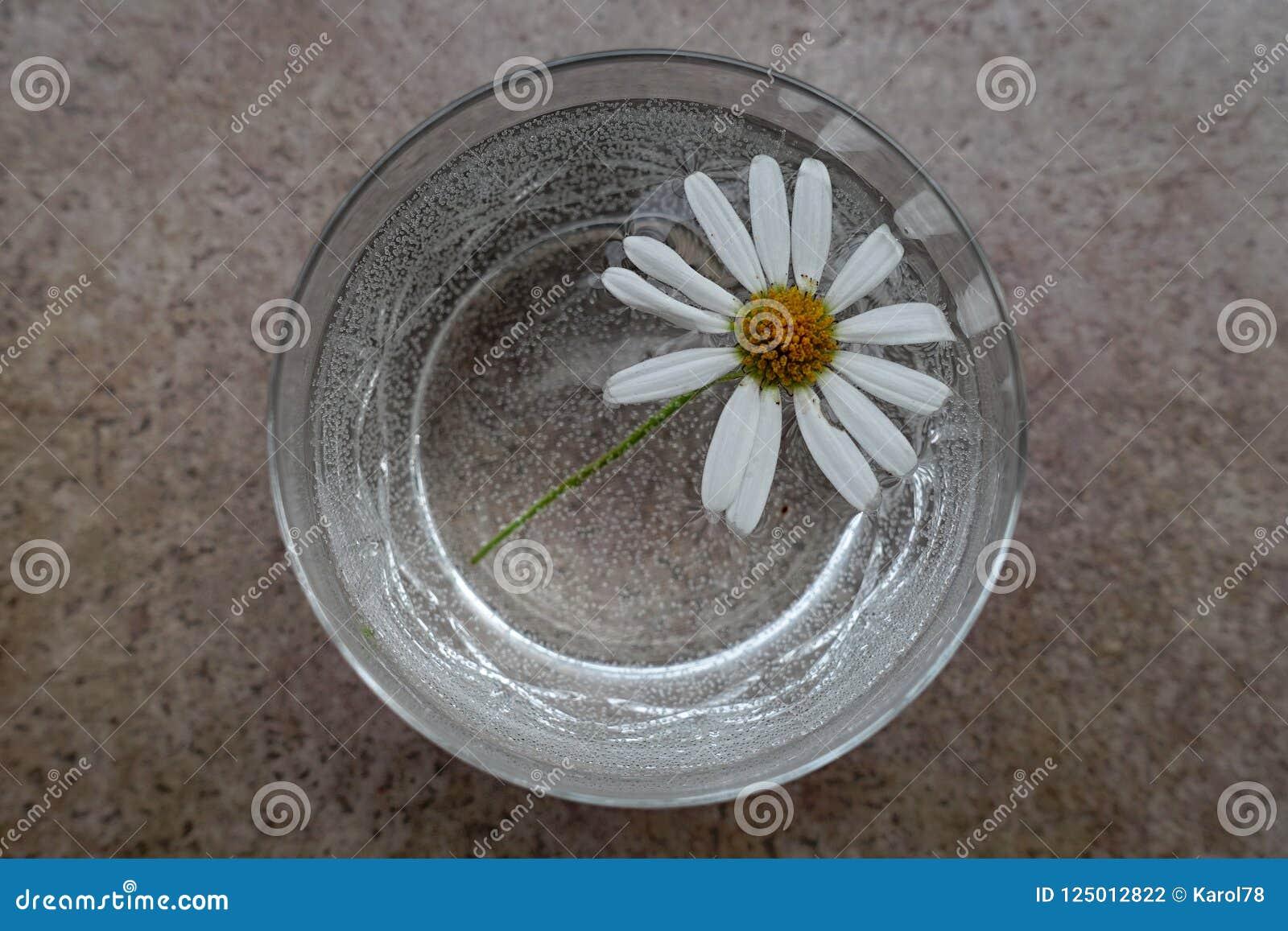 Цветок маргаритки маргаритки с белыми лепестками в граненом стекле