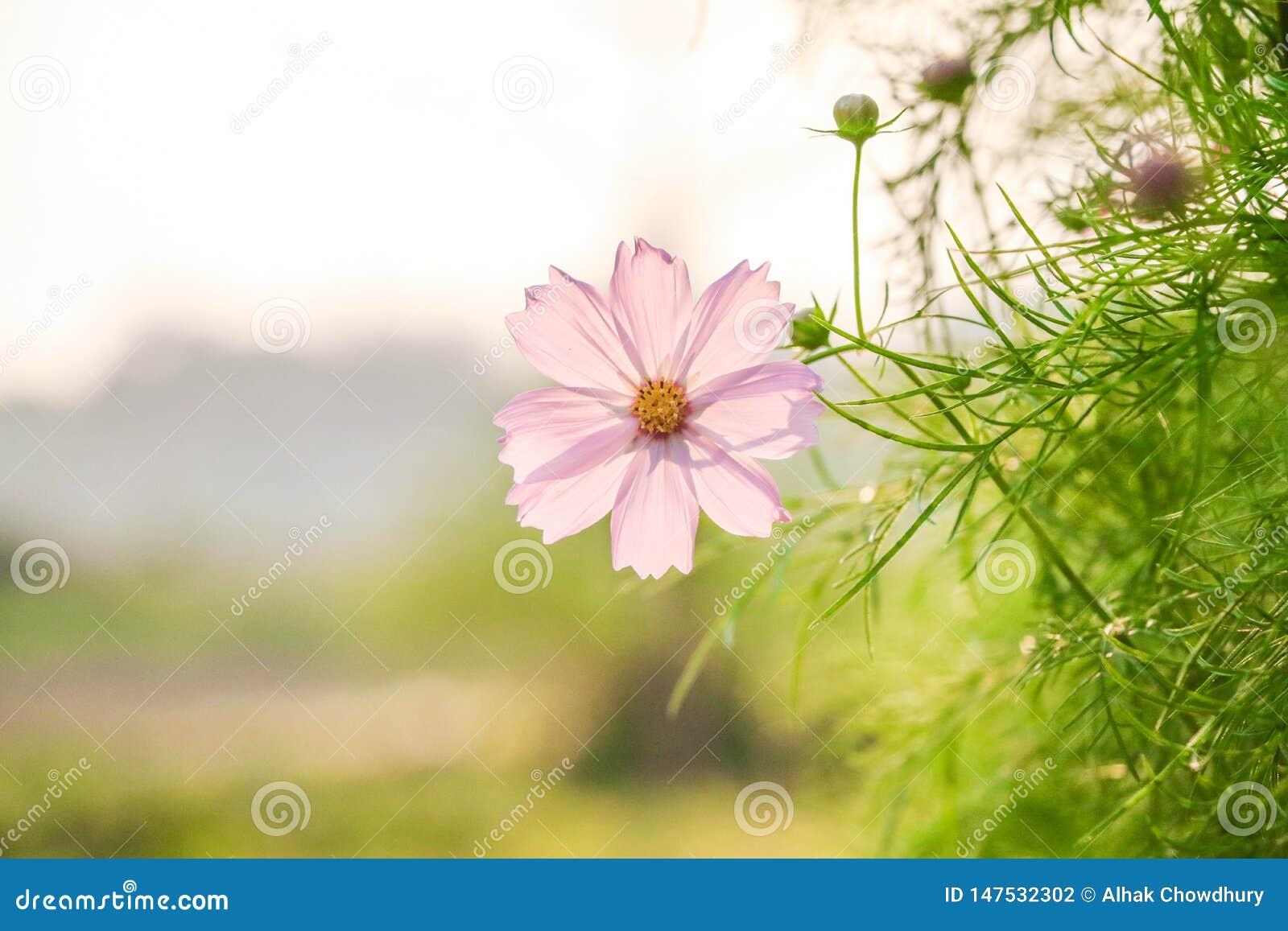 Цветок на более голубых листьях зеленого цвета предпосылки