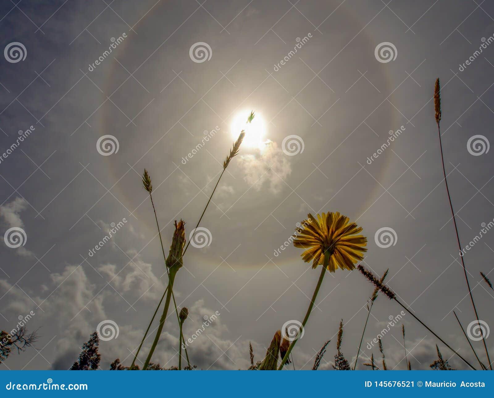 Цветок одуванчика и некоторая трава