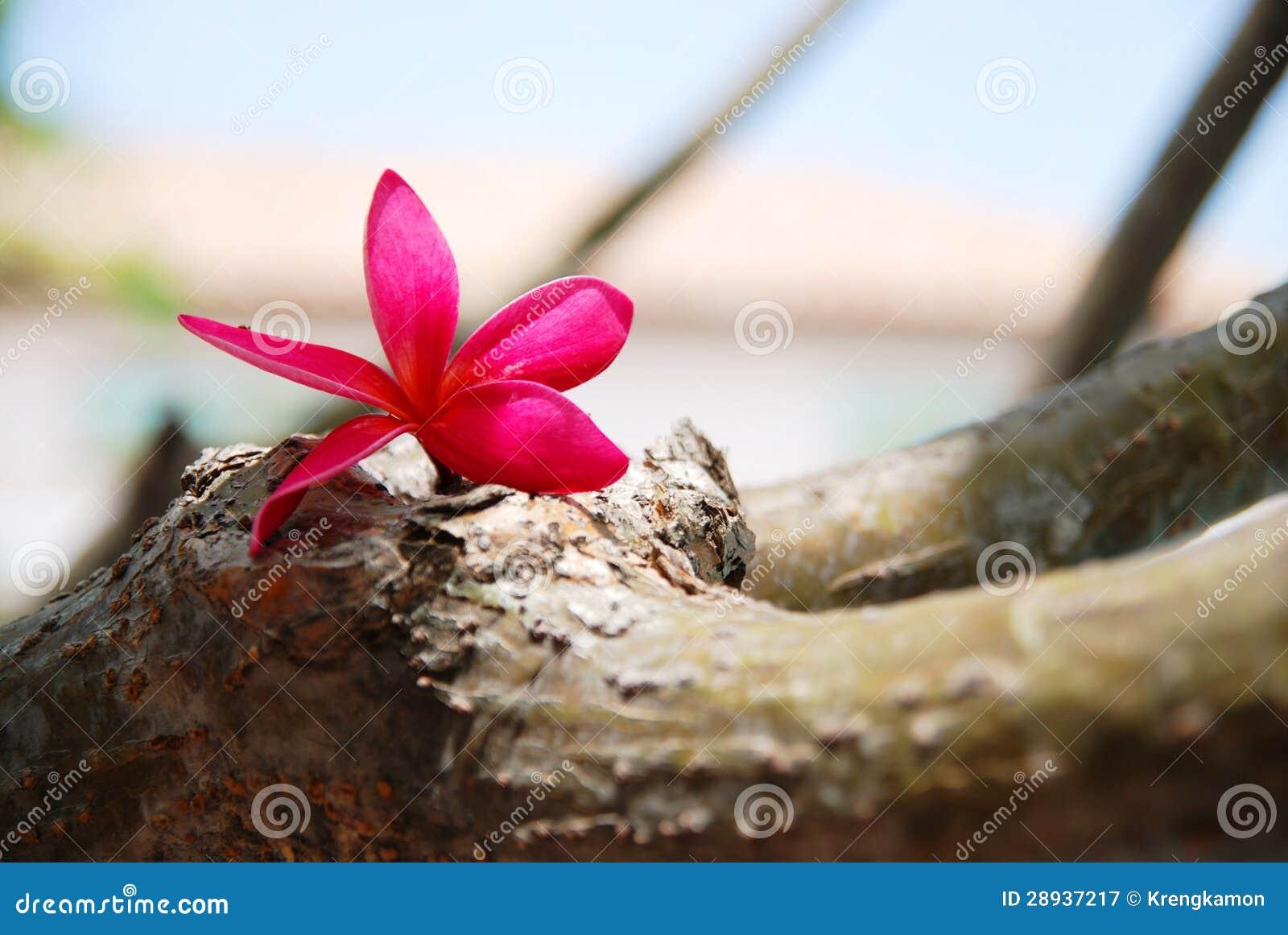 Цветок ослабляет