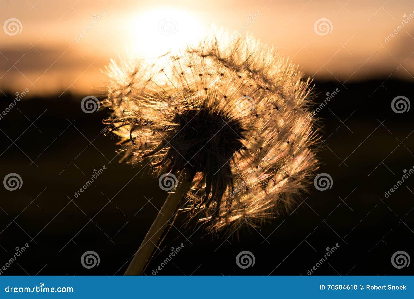 Цветок перед заходом солнца