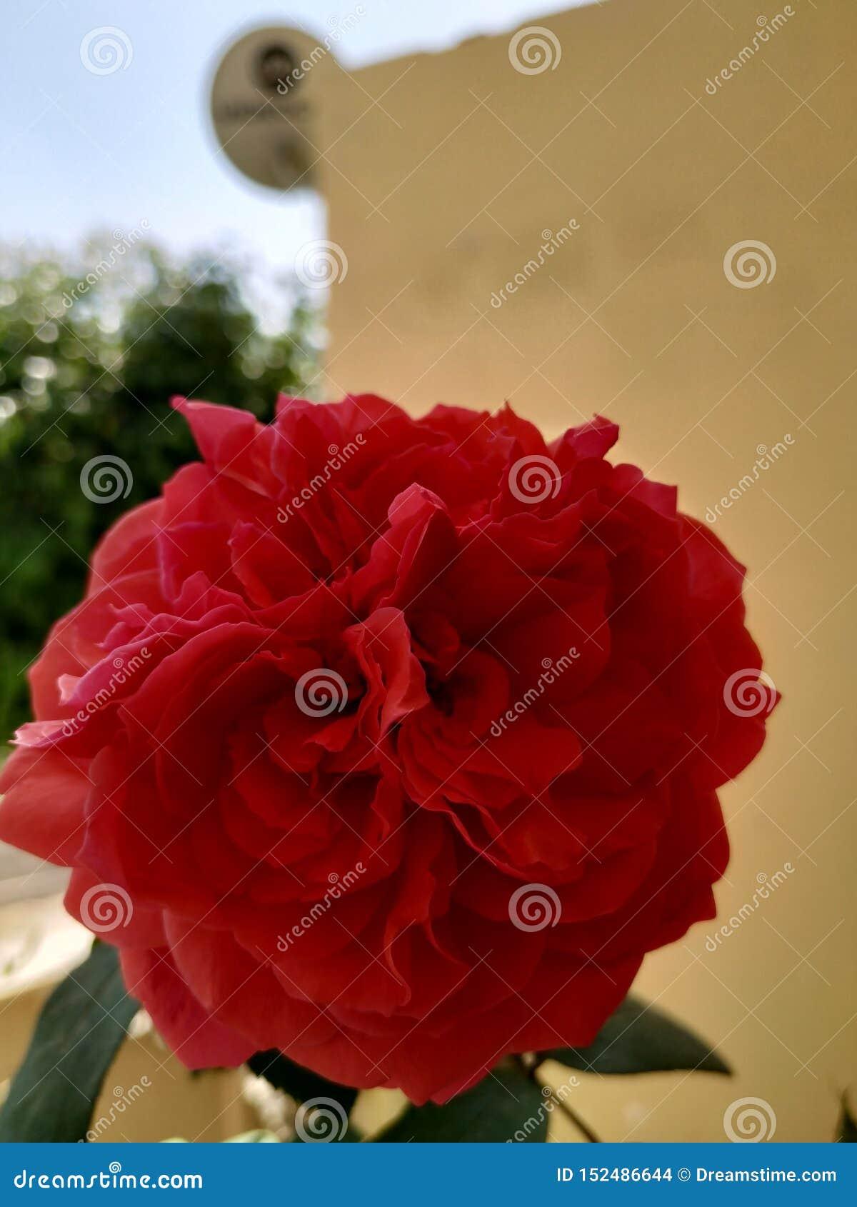 Цветок поднял