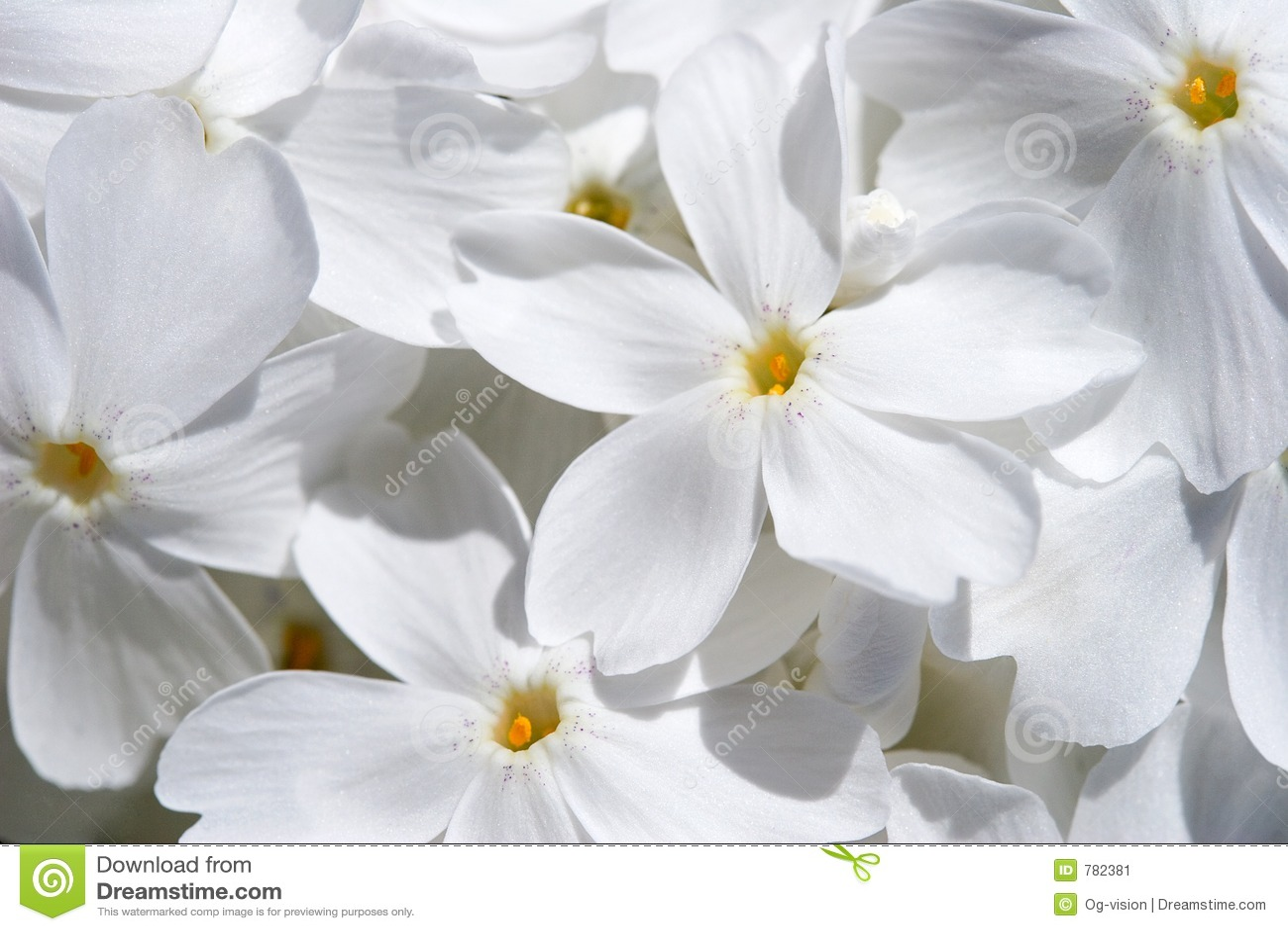 цветок предпосылки