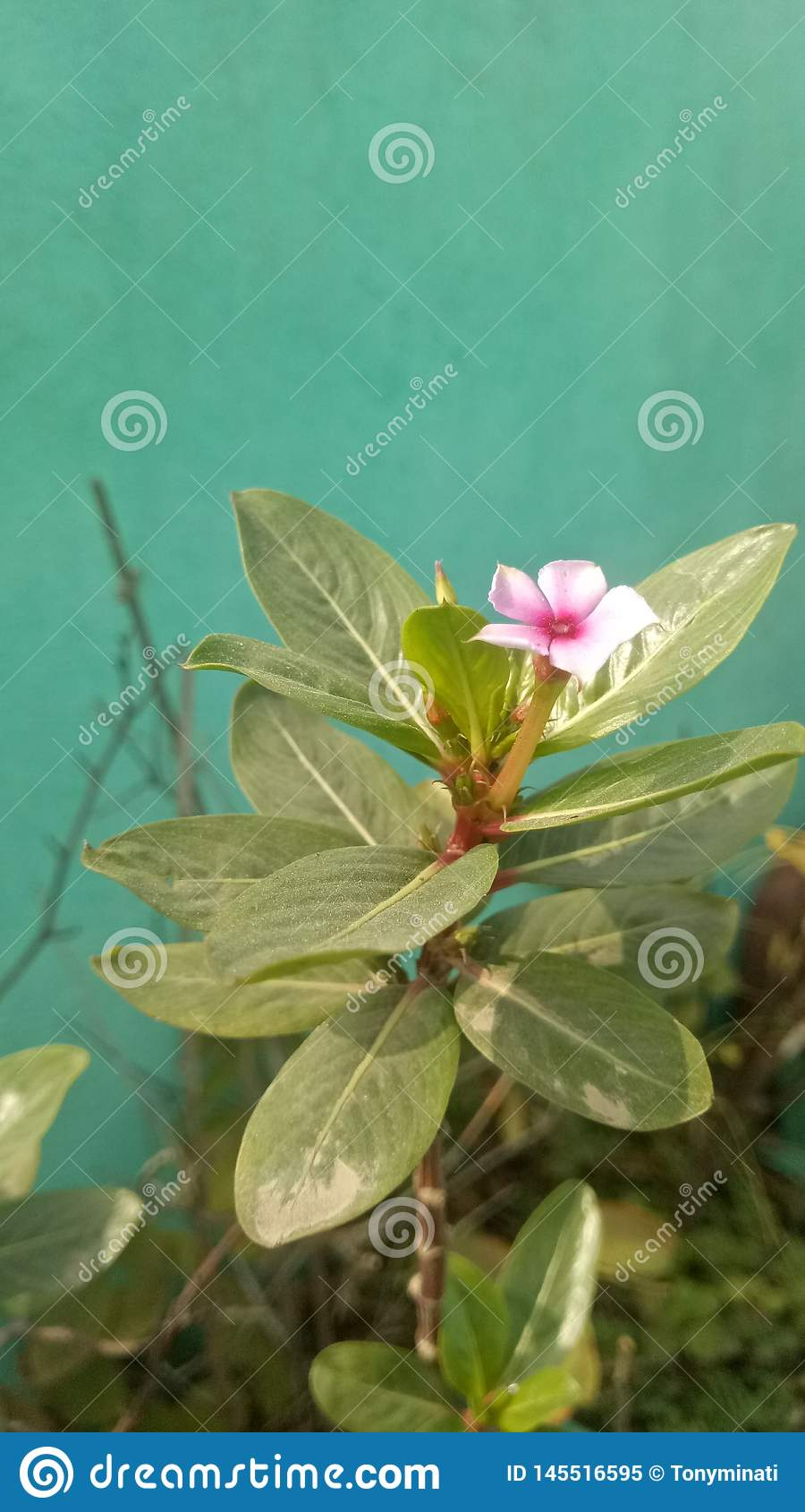 Цветок природы маленький оно действительно маленький