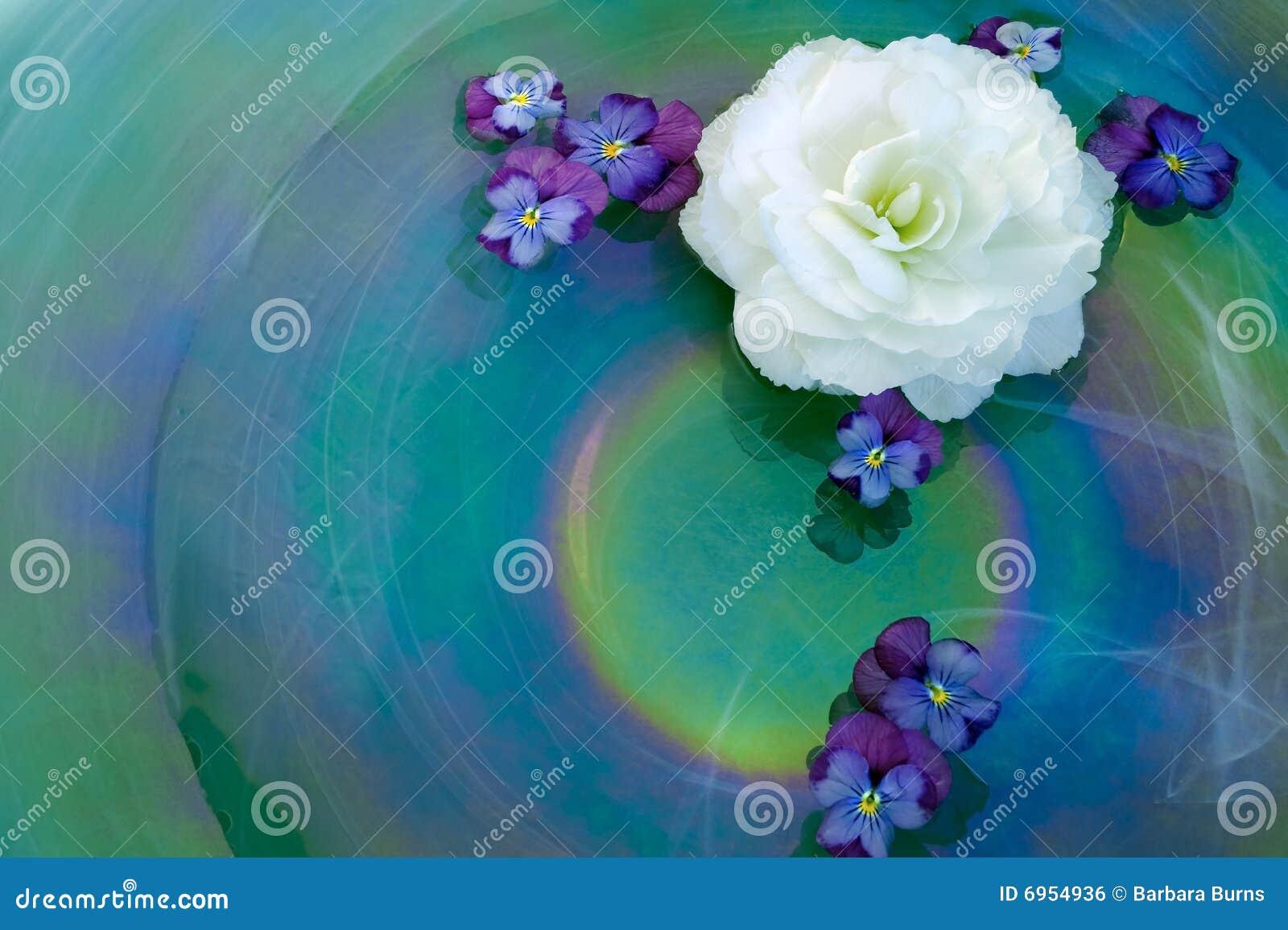 цветок расположения