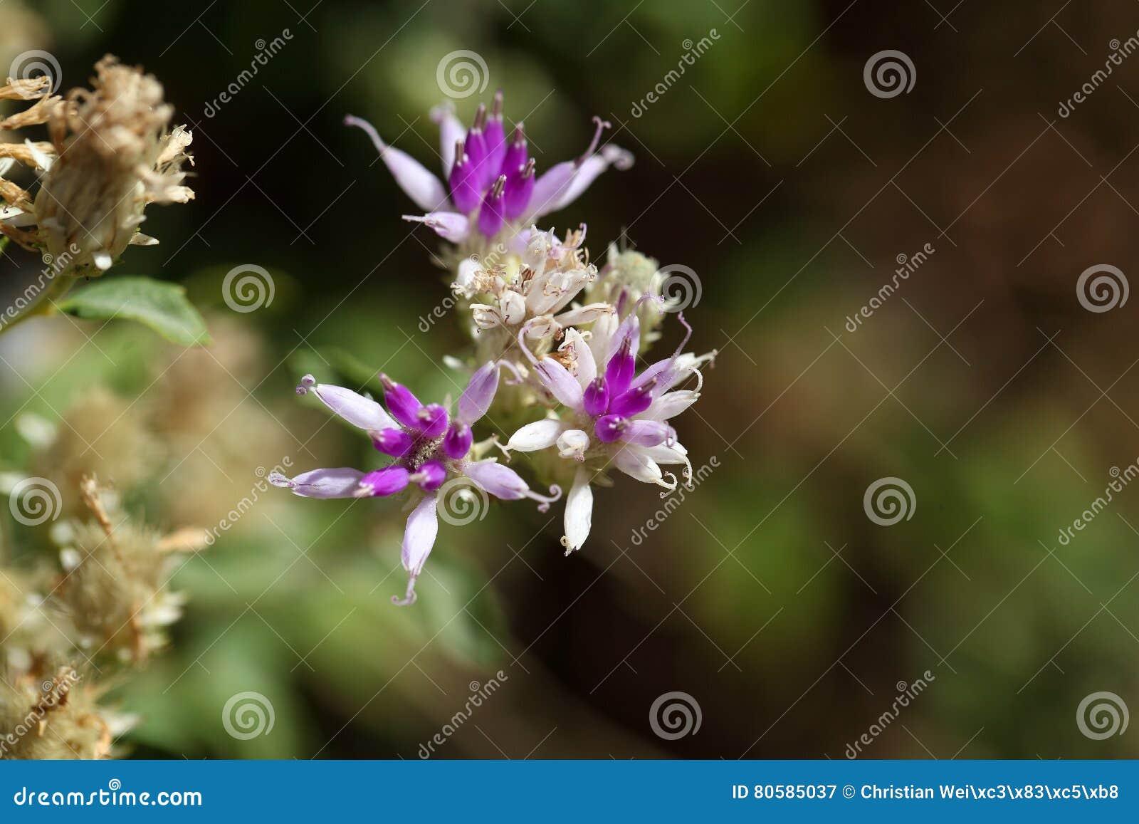 Купить цветы оптом в Москве мелкий и крупный опт живых цветов