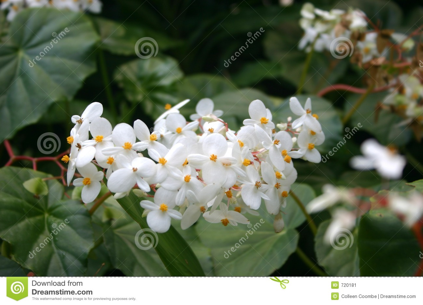 цветок тропический