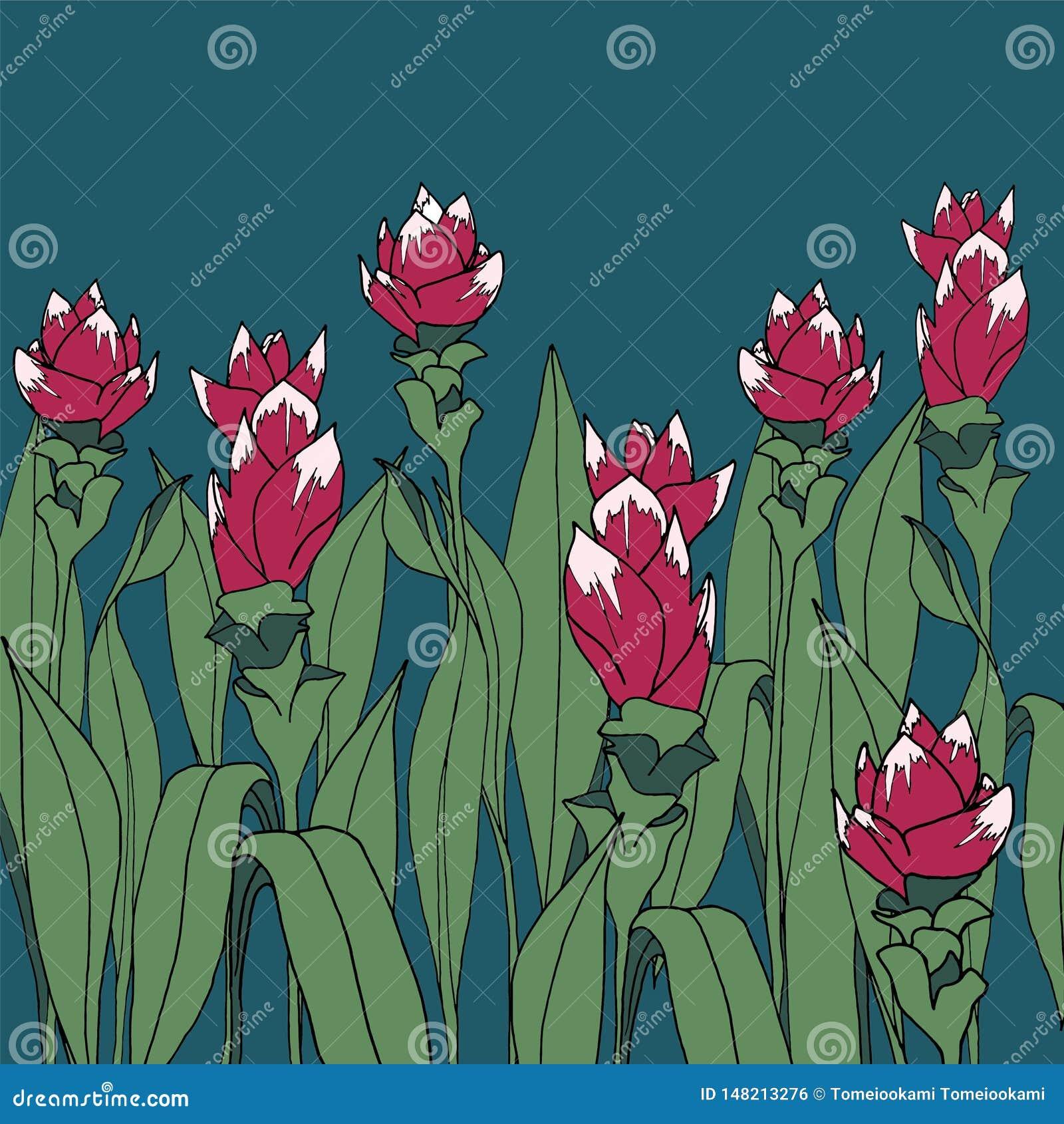 Цветок турмерина