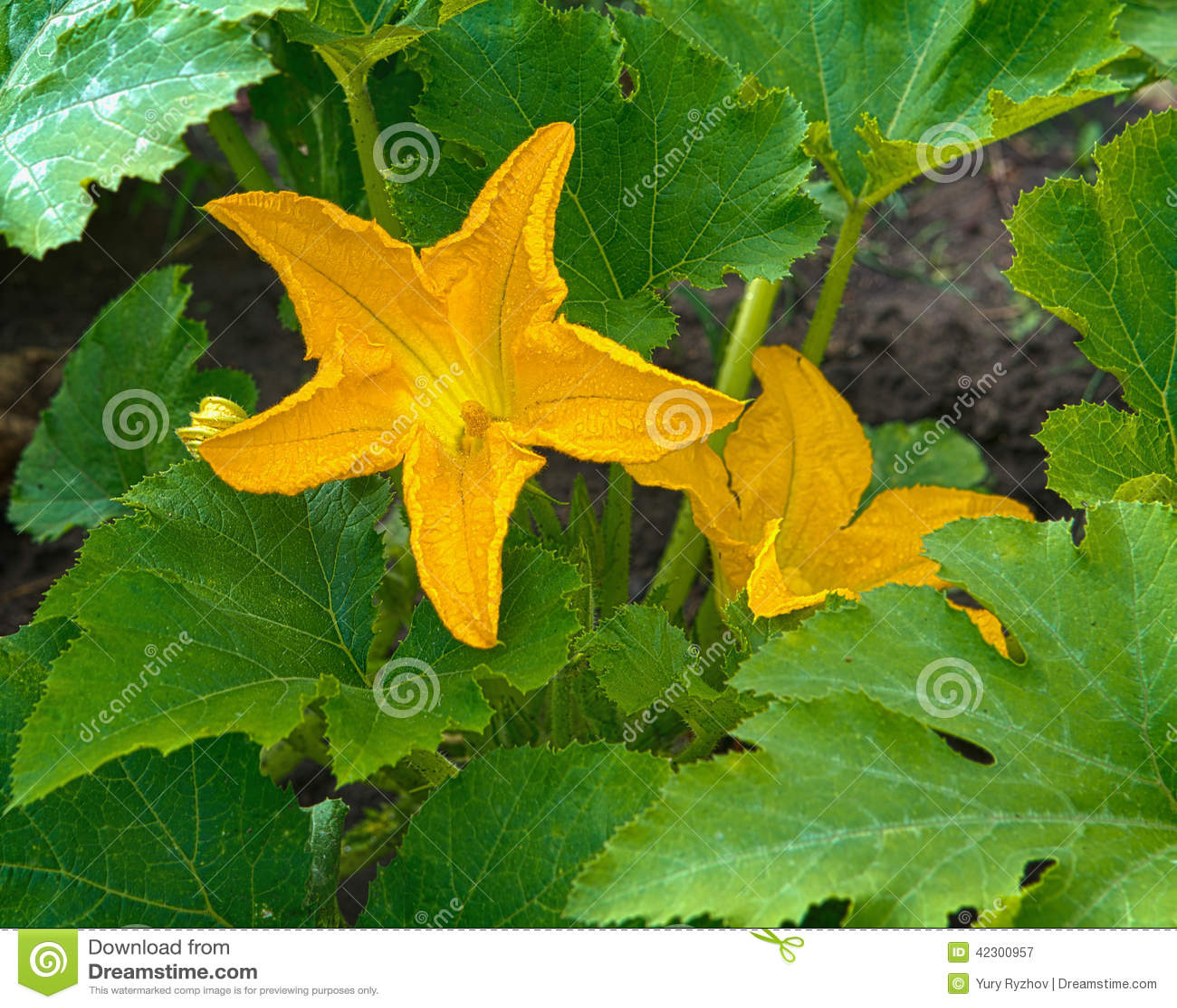 Цветы из тыквы 4