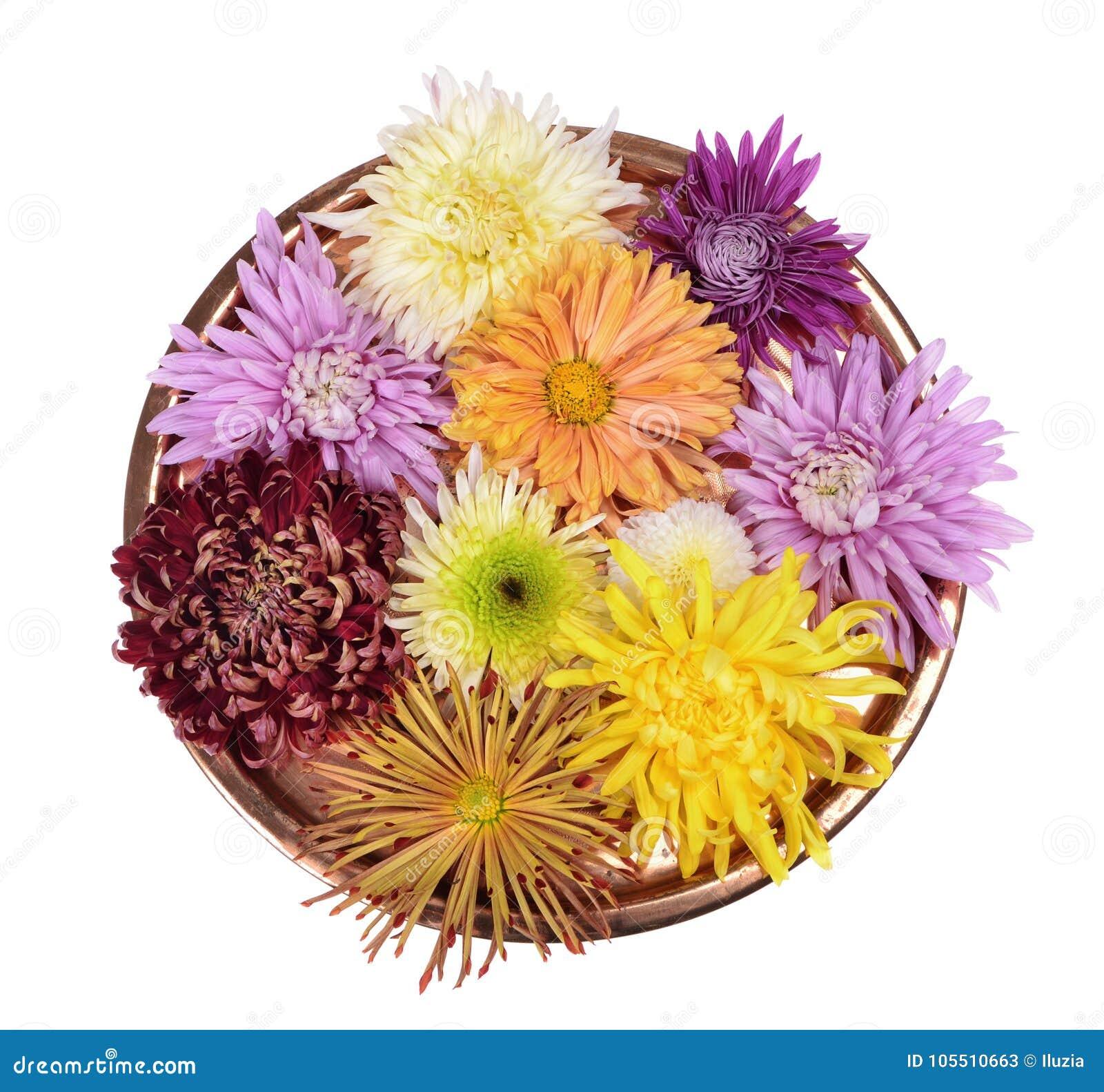 Цветок хризантем другого цвета