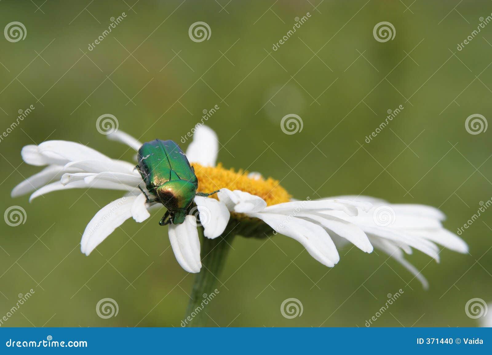 цветок черепашки