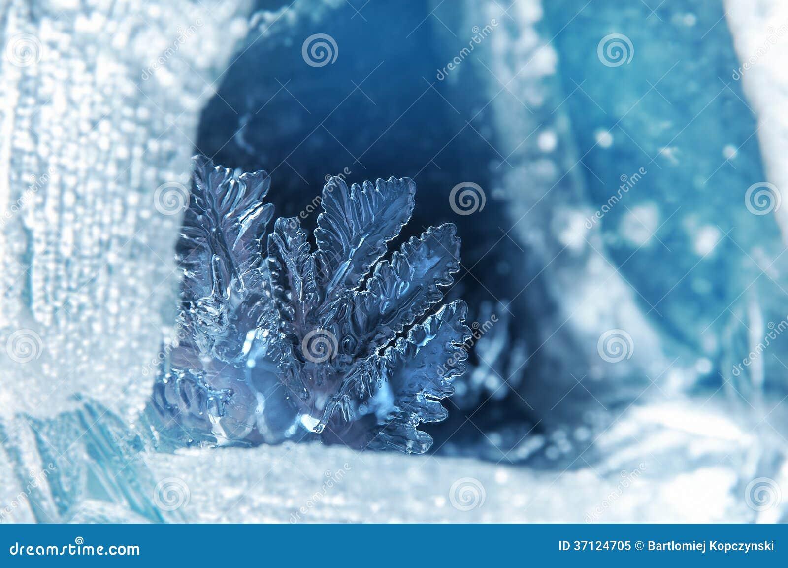 Цветок льда