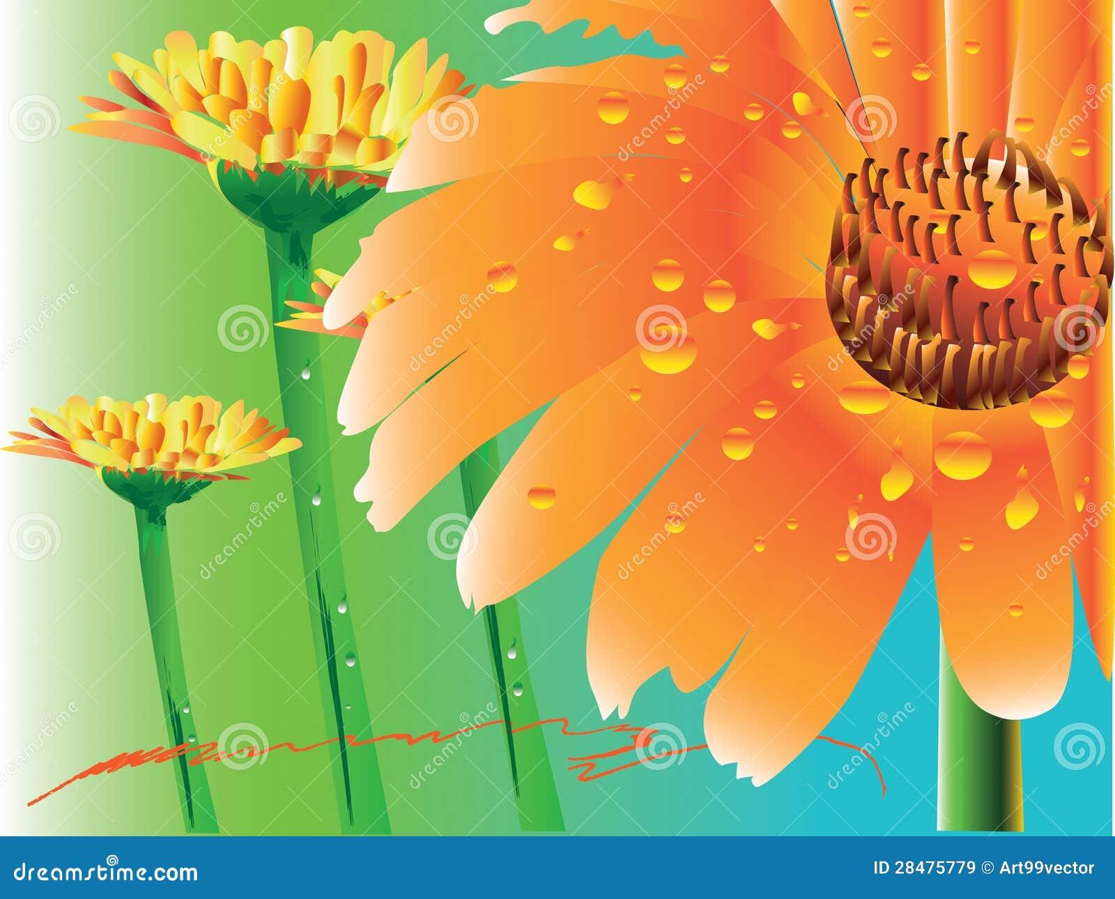 Цветок gerbera маргаритки