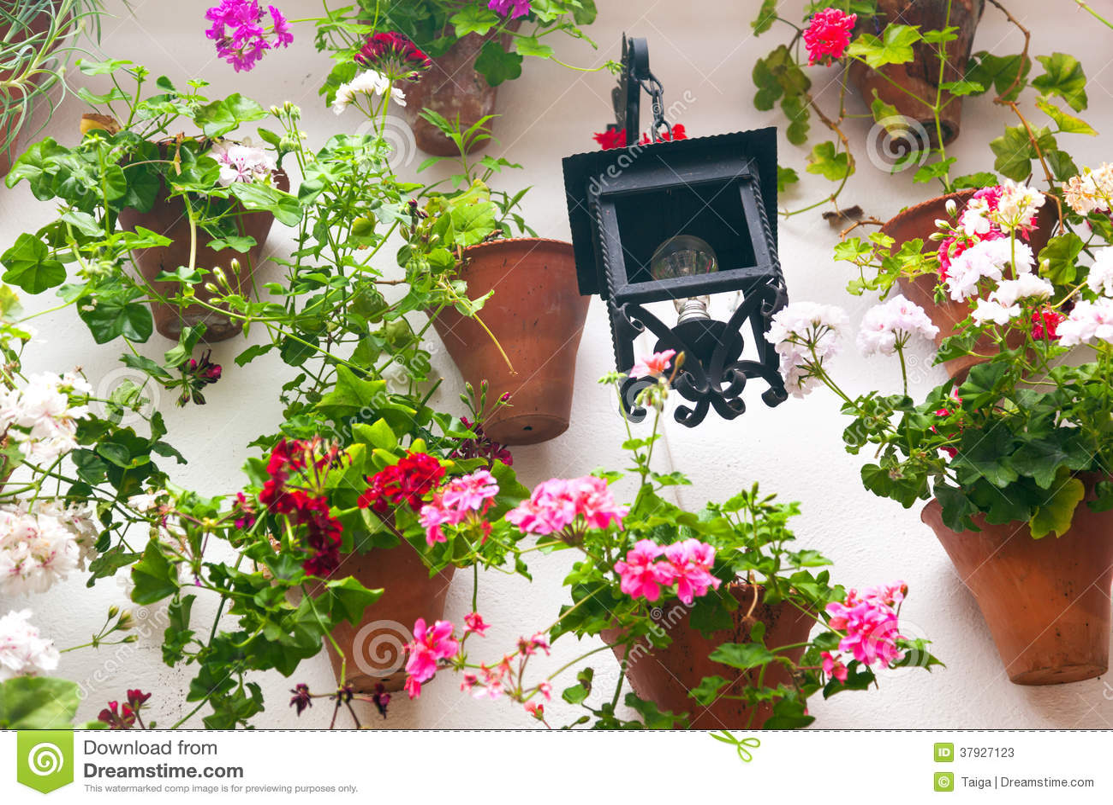 Цветочные горшки и красный цветок на белой стене с винтажным фонариком.