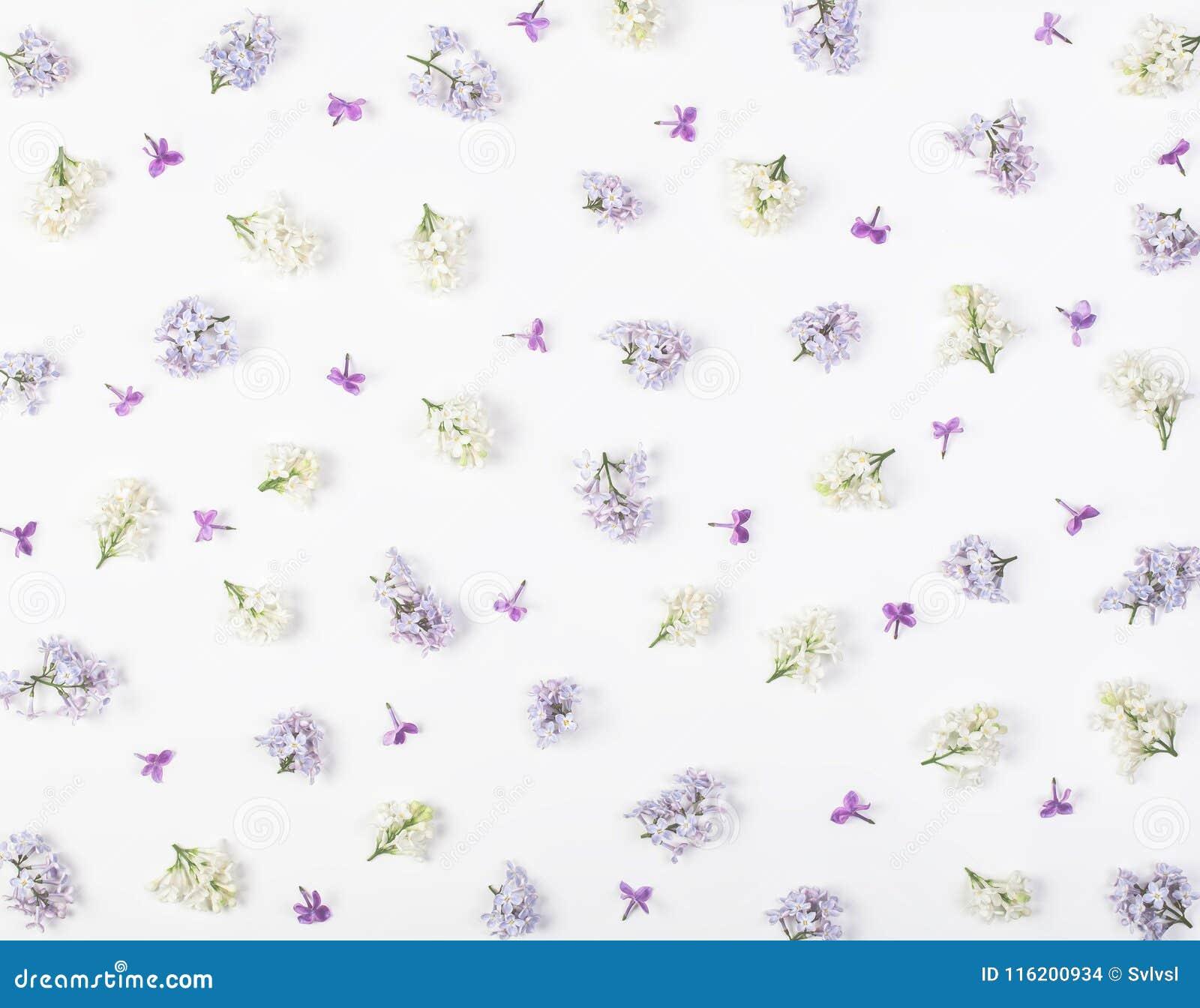 Цветочный узор сделанный из весны белой и фиолетовых изолированных цветков сирени на белой предпосылке Плоское положение