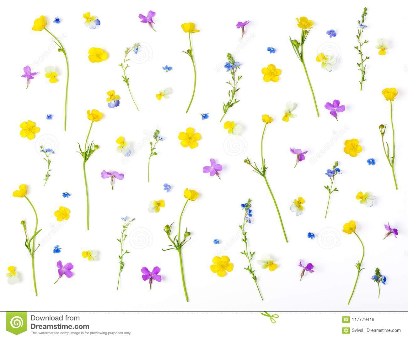 Цветочный узор сделанный из изолированных цветков луга на белой предпосылке Плоское положение
