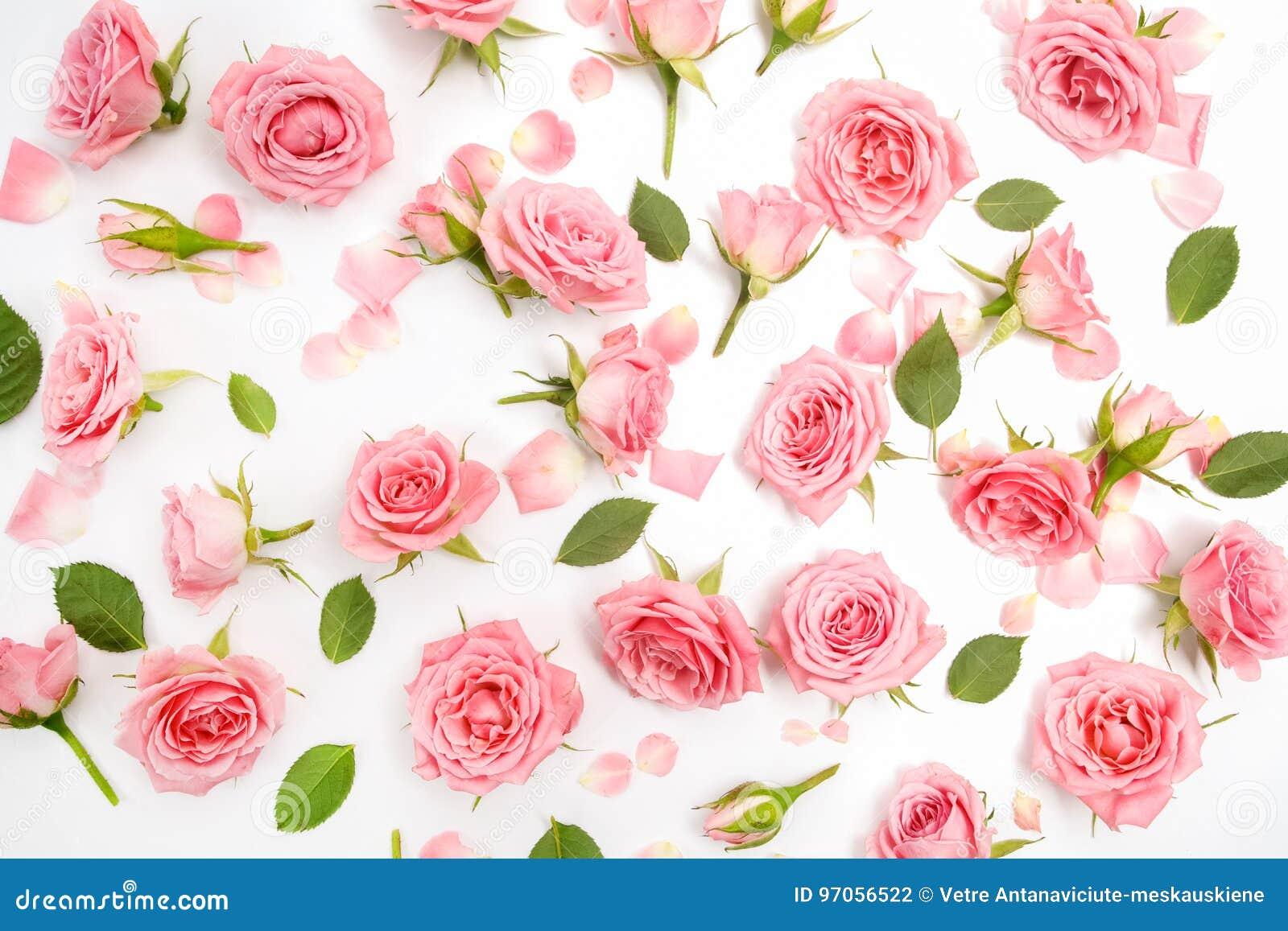 Цветочный узор сделанный розовых роз, зеленых листьев, ветвей на белой предпосылке Плоское положение, взгляд сверху желтый цвет к
