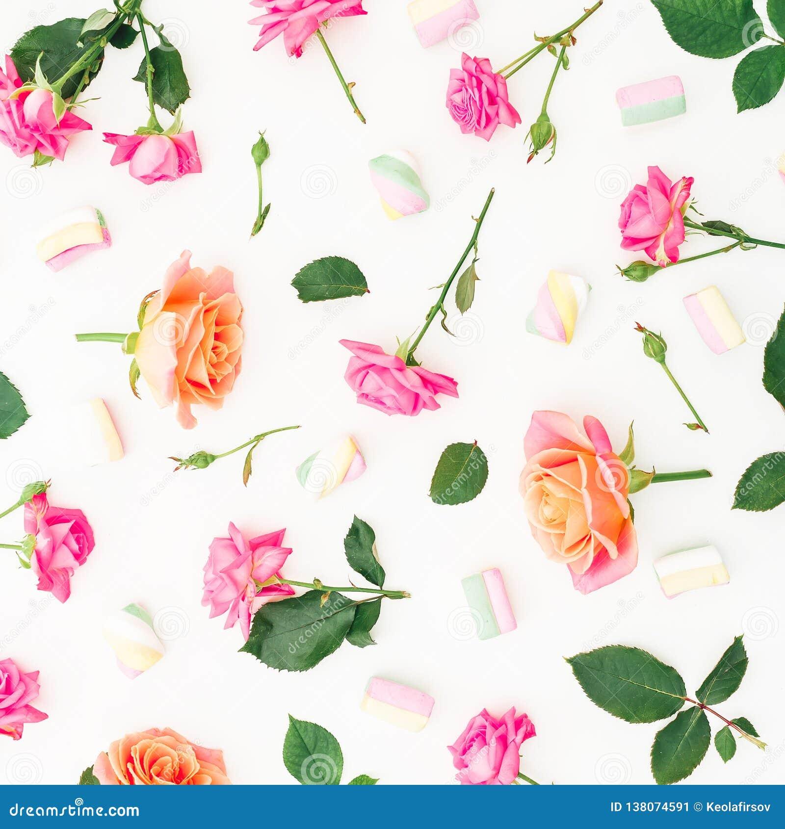 Цветочный узор с розовыми цветками роз и лепестками роз на белой предпосылке красный цвет поднял Плоское положение, взгляд сверху