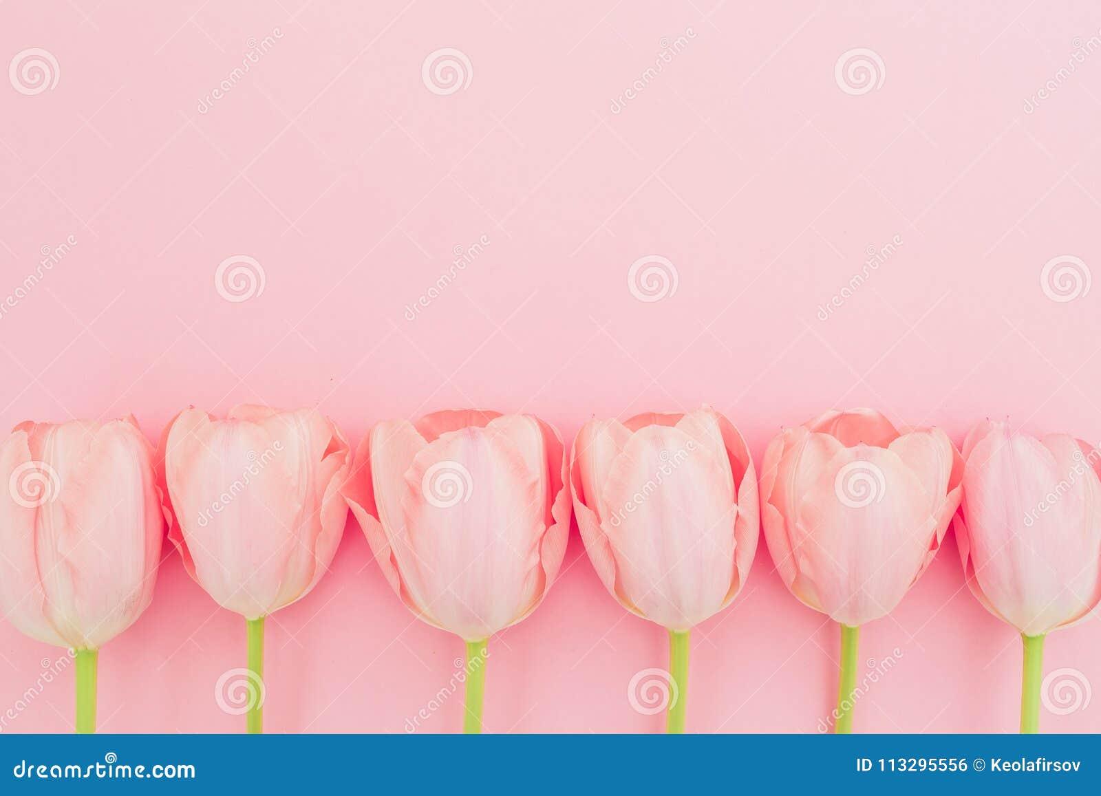 Цветочный узор с тюльпанами цветет на розовой пастельной предпосылке Плоское положение, взгляд сверху Предпосылка времени весны
