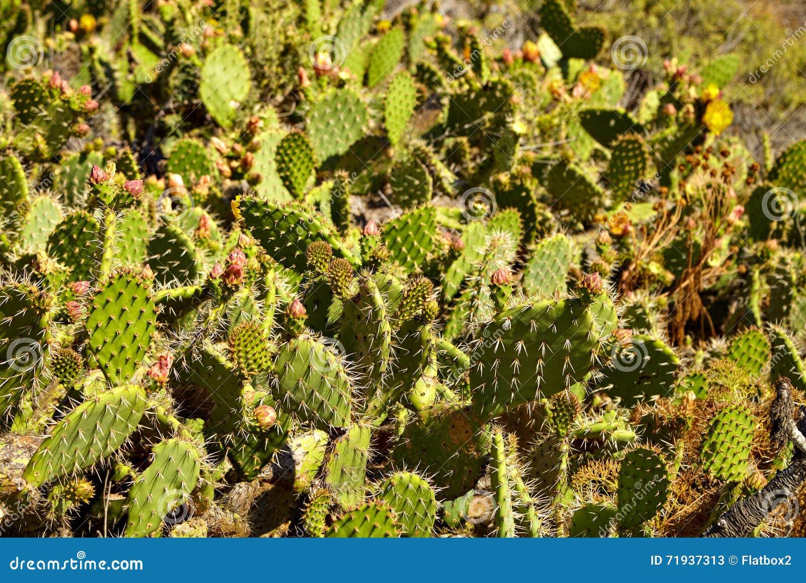 Цветя кактус и индийские wildflowers одеяла