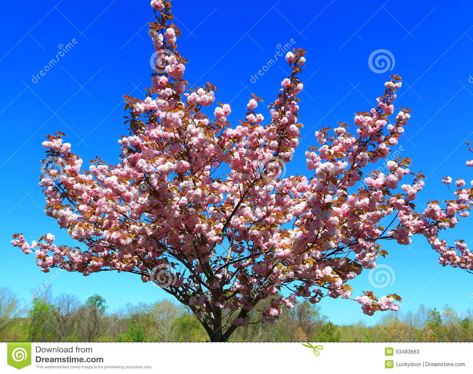Цветя персиковое дерево