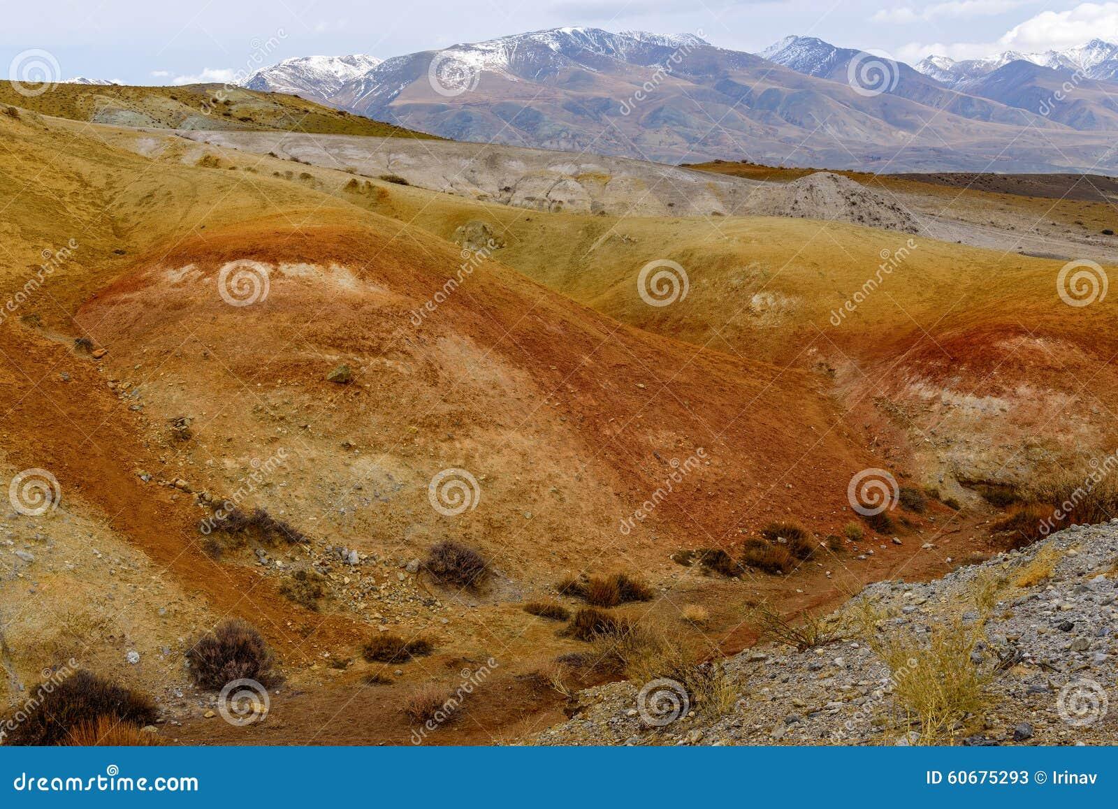 Цвет пустыни степи гор