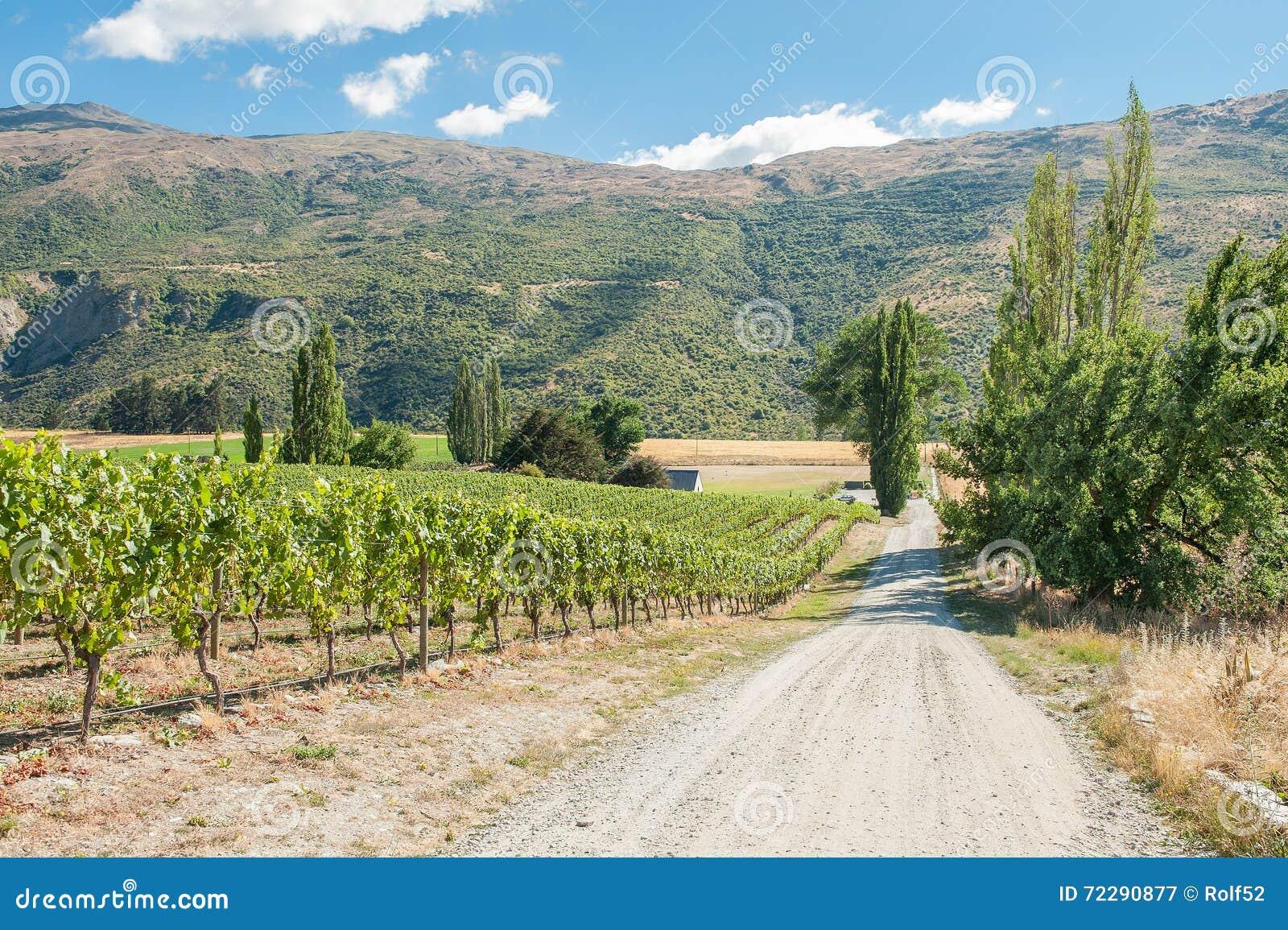 Download Центральный виноградник Otago Стоковое Изображение - изображение насчитывающей ландшафт, расти: 72290877