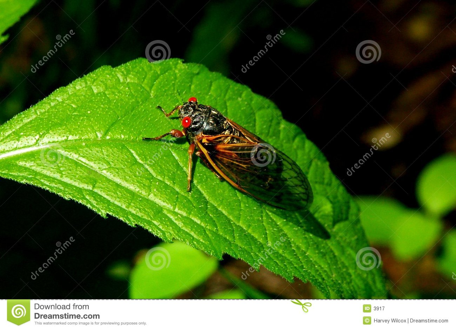 цикады b
