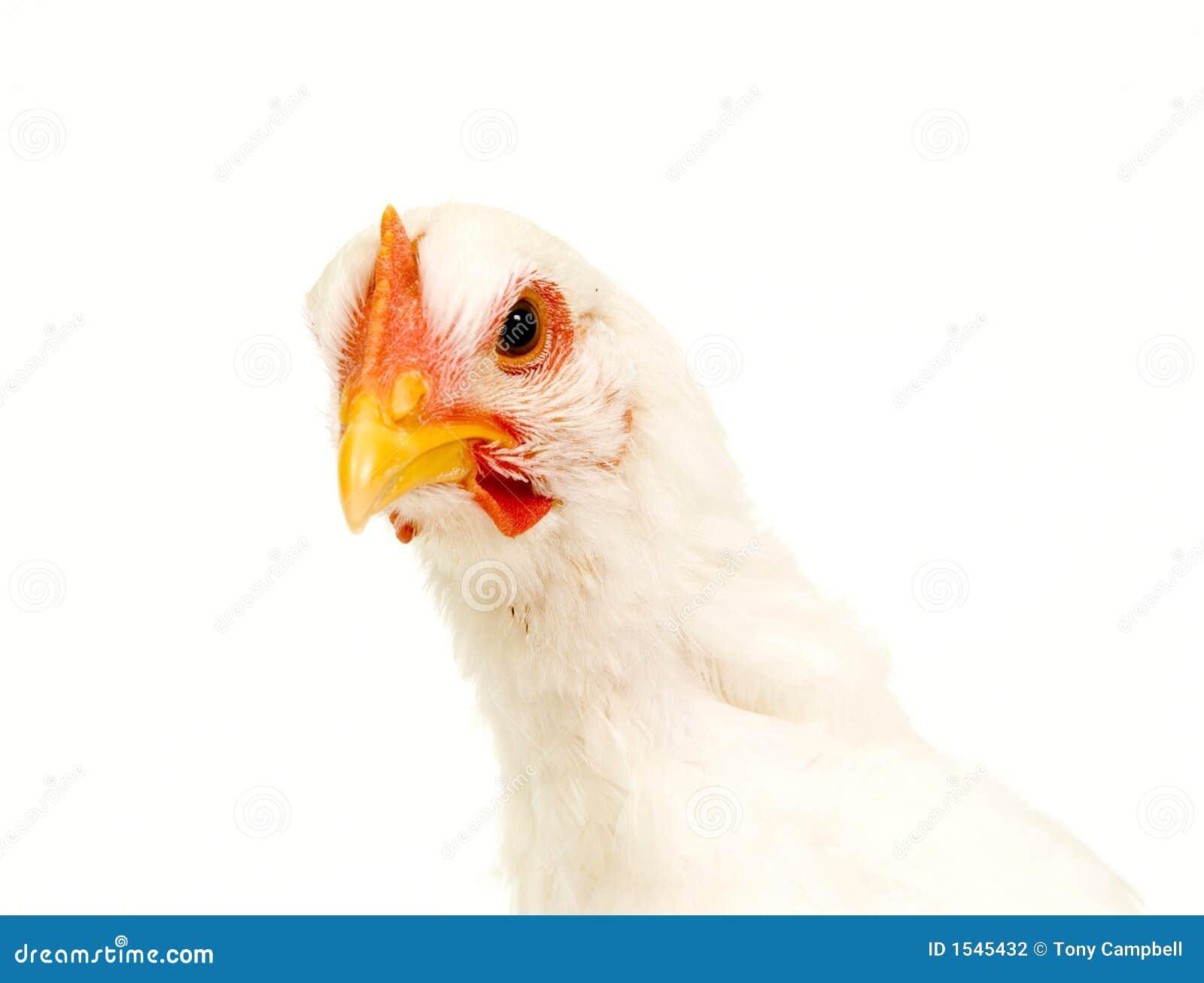 цыпленок камеры предпосылки смотря бела
