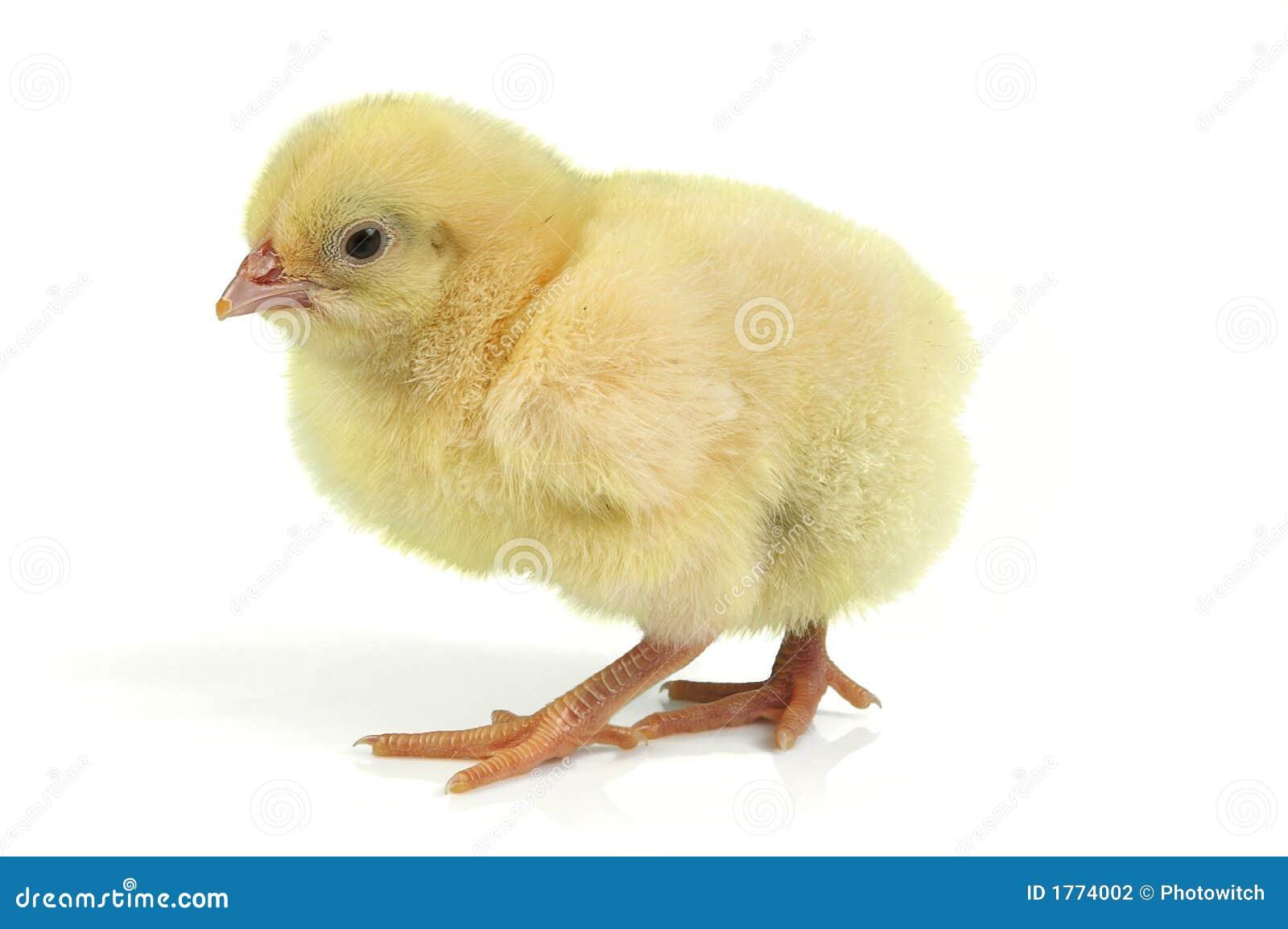 цыпленок пасха