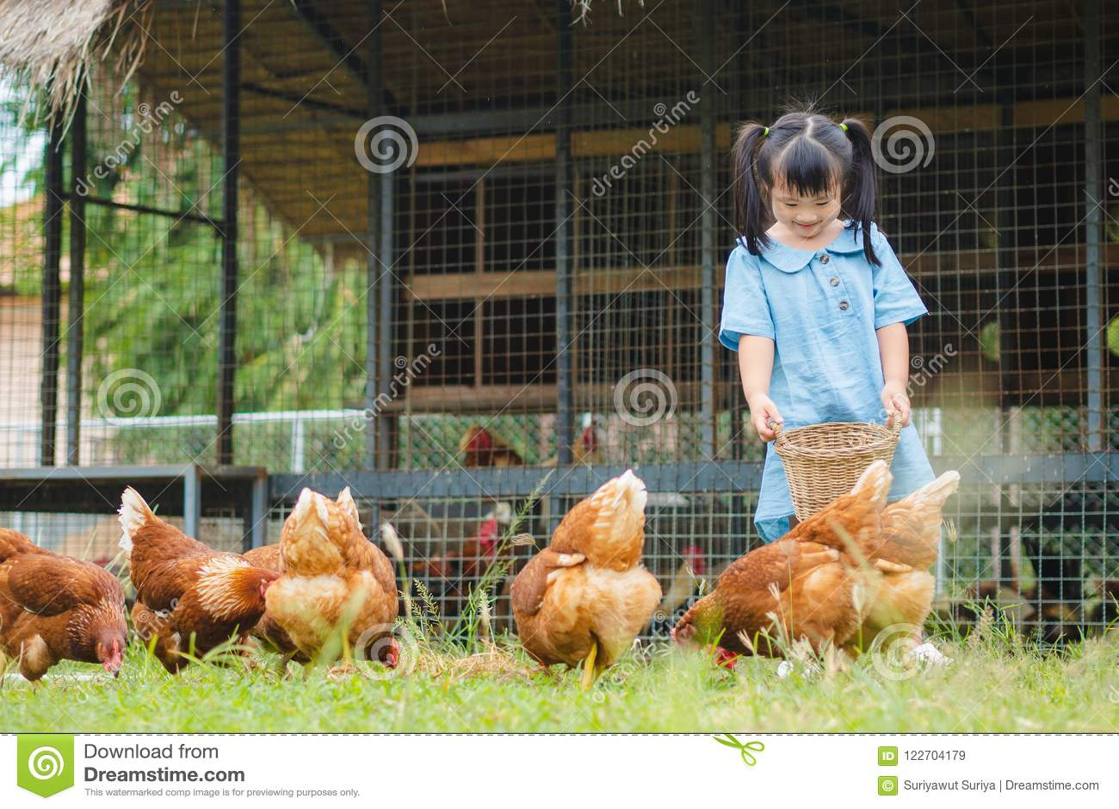 Цыплята счастливой маленькой девочки подавая в ферме Сельское хозяйство, любимчик, Ha