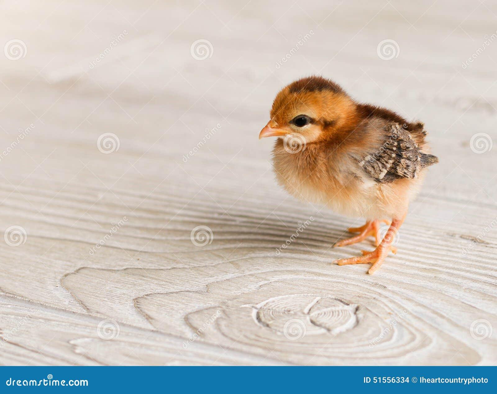 Цыпленок младенца