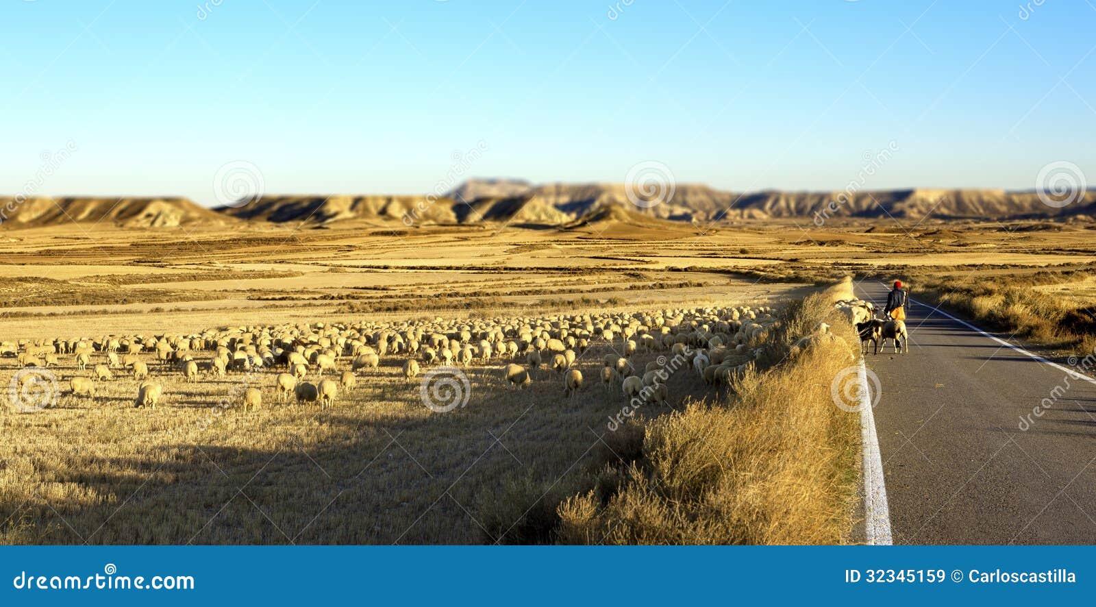 Чабан и стадо овец