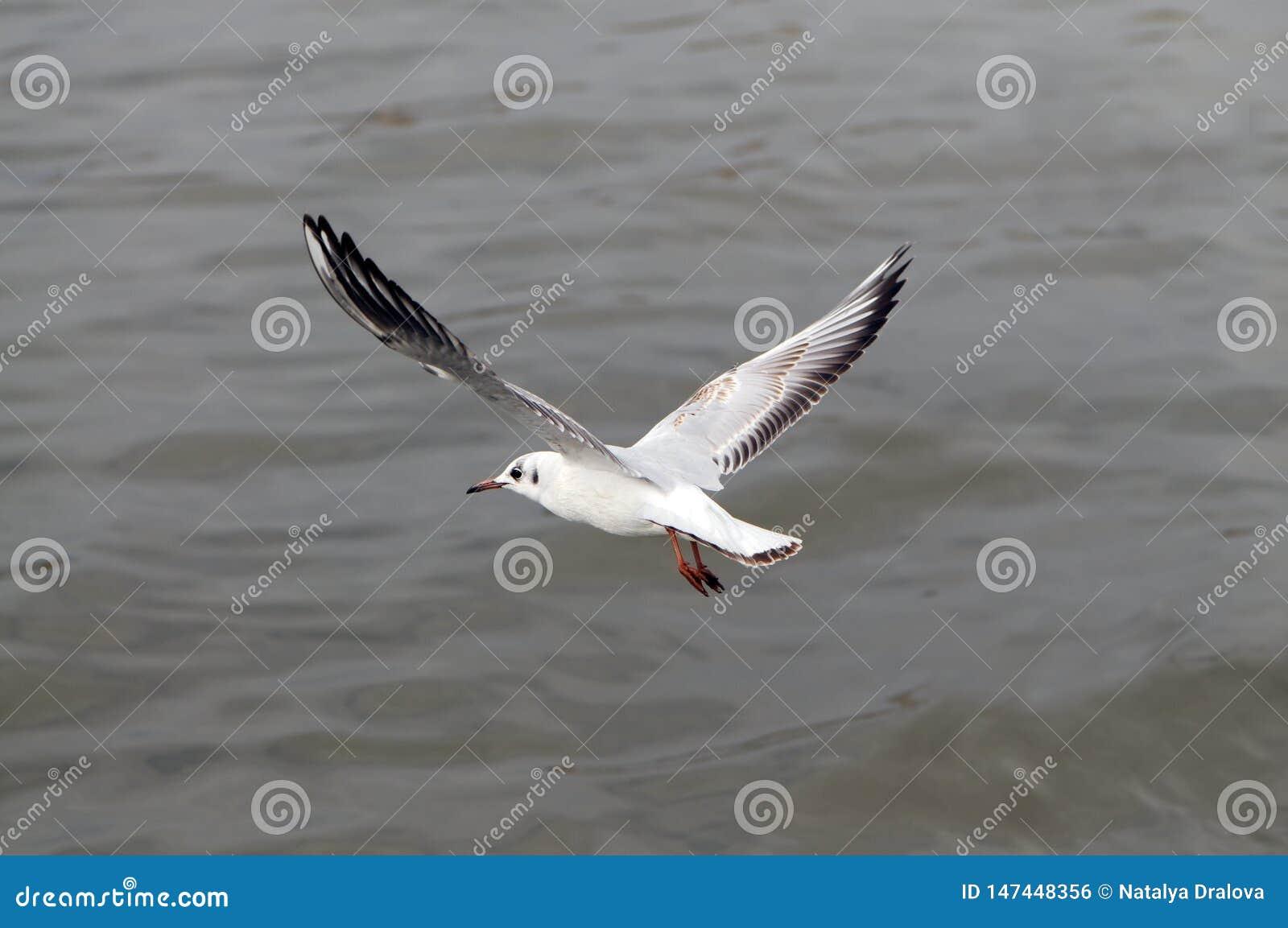 Чайка завишет над темносиним морем