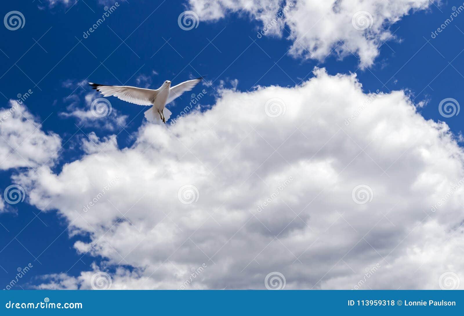 Чайка летания пасьянса
