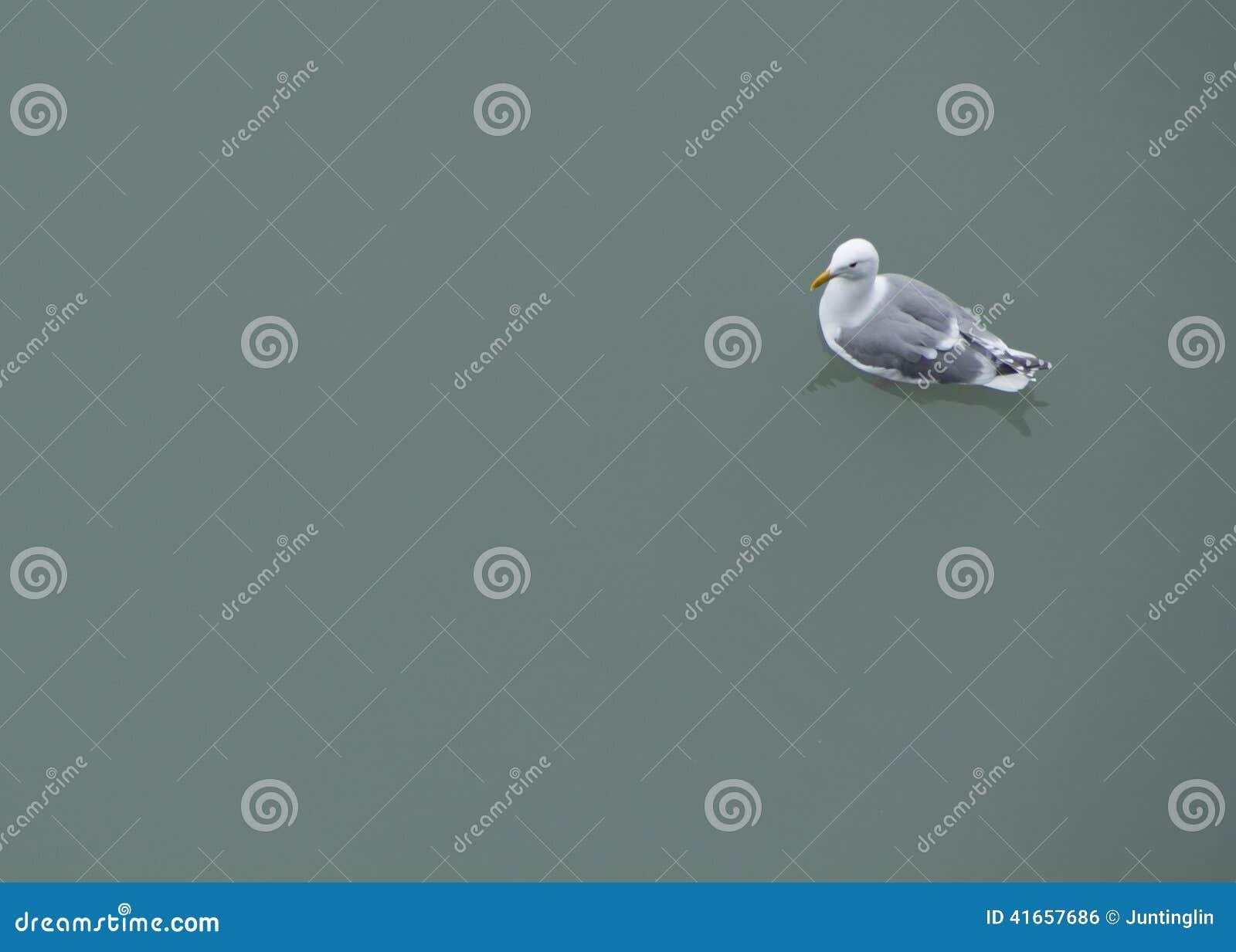 Чайка на ровной воде