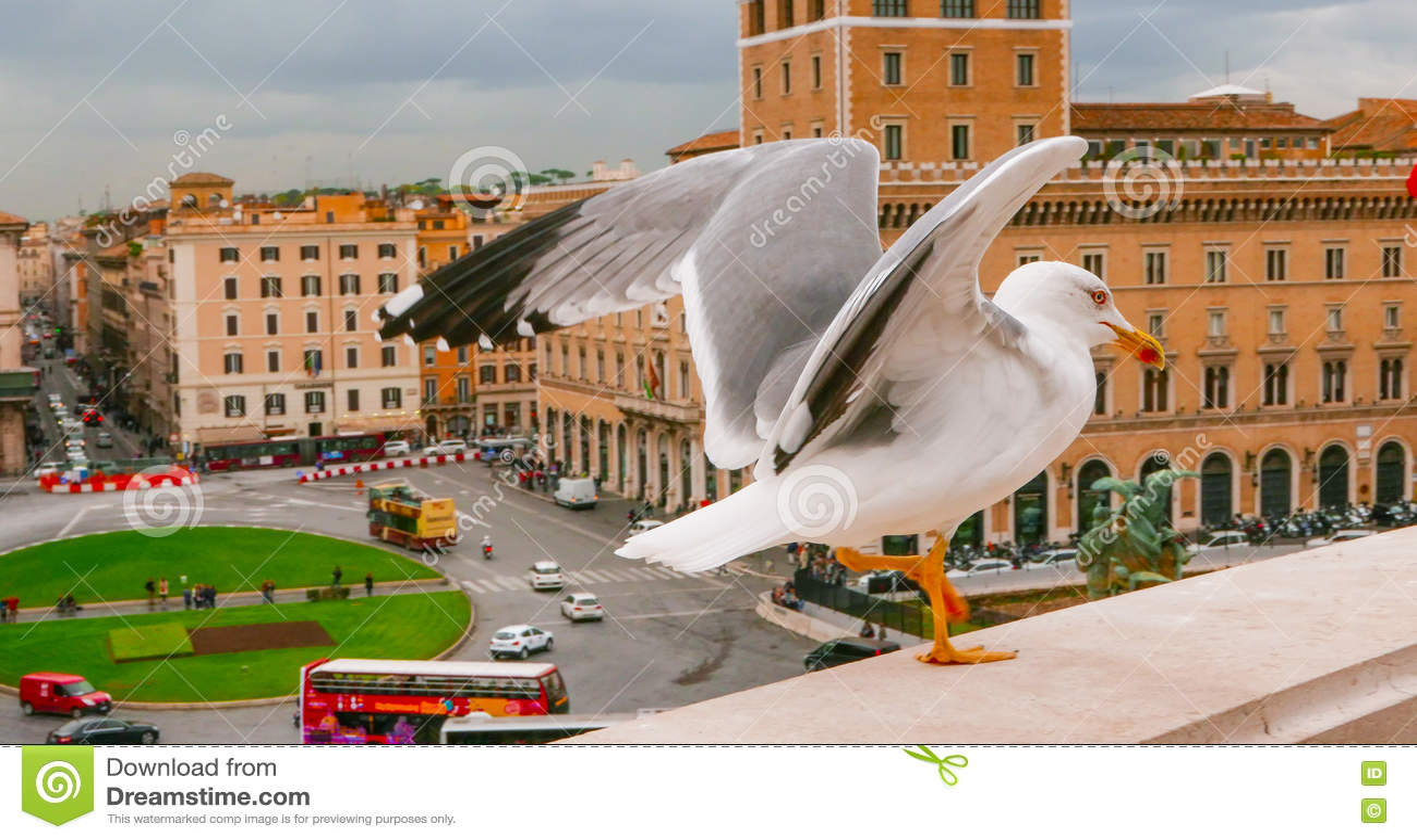 Чайка на стене национального монумента в Риме