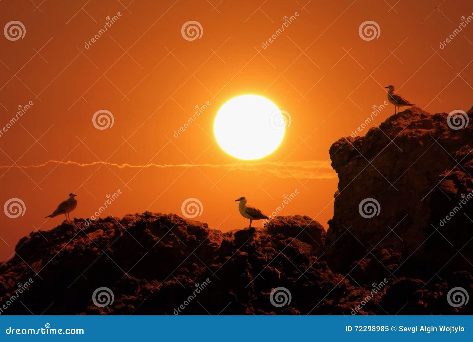 Download Чайки на утесах и заходе солнца Стоковое Изображение - изображение насчитывающей sunset, baxter: 72298985