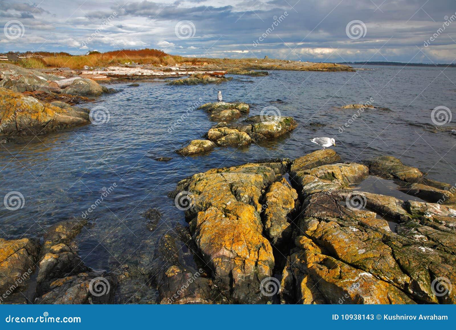 чайки прохода сидят камни