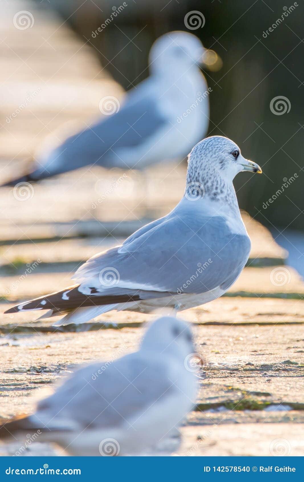 Чайки стоят на моле и наблюдают окружающую среду