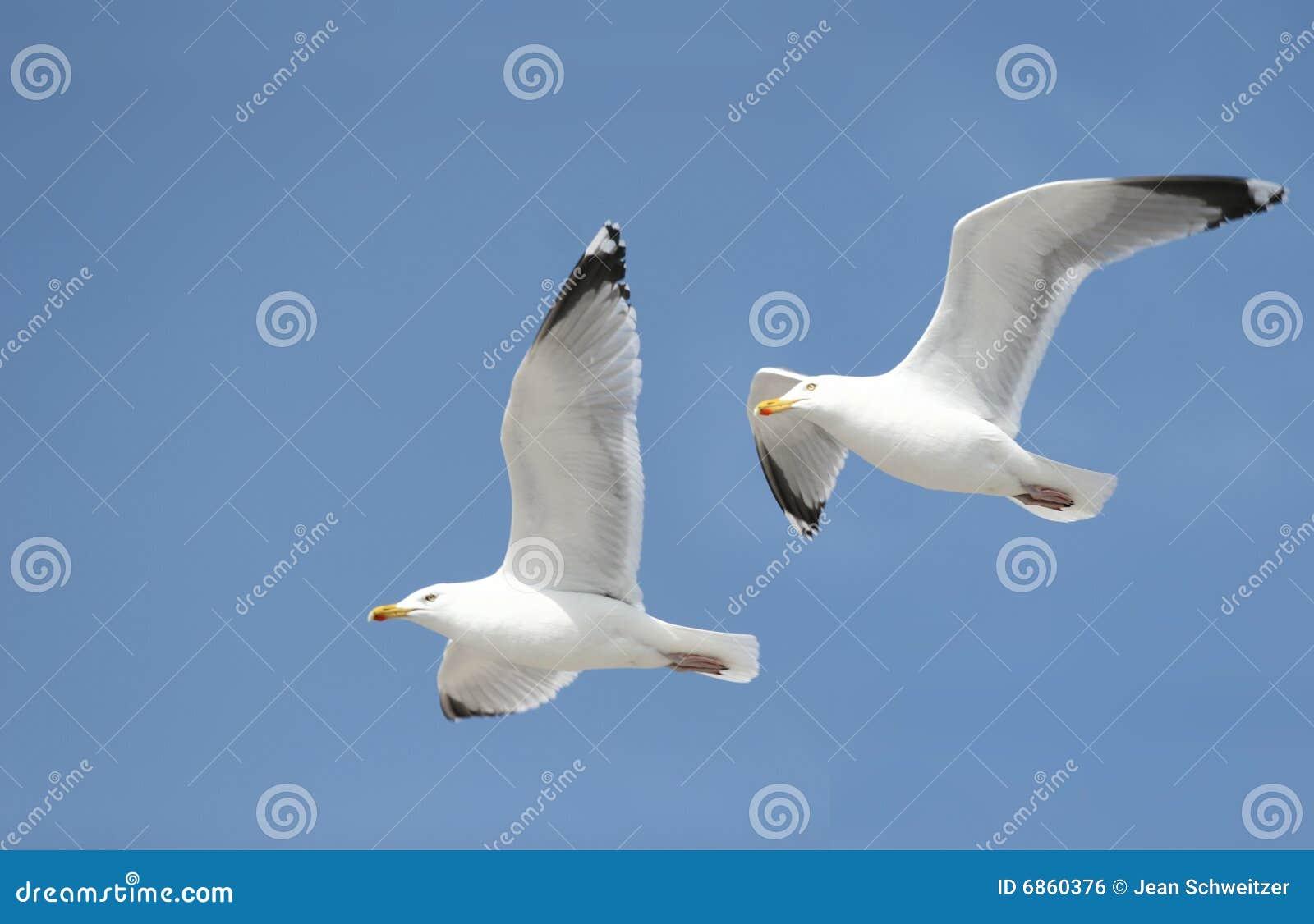 чайки 2