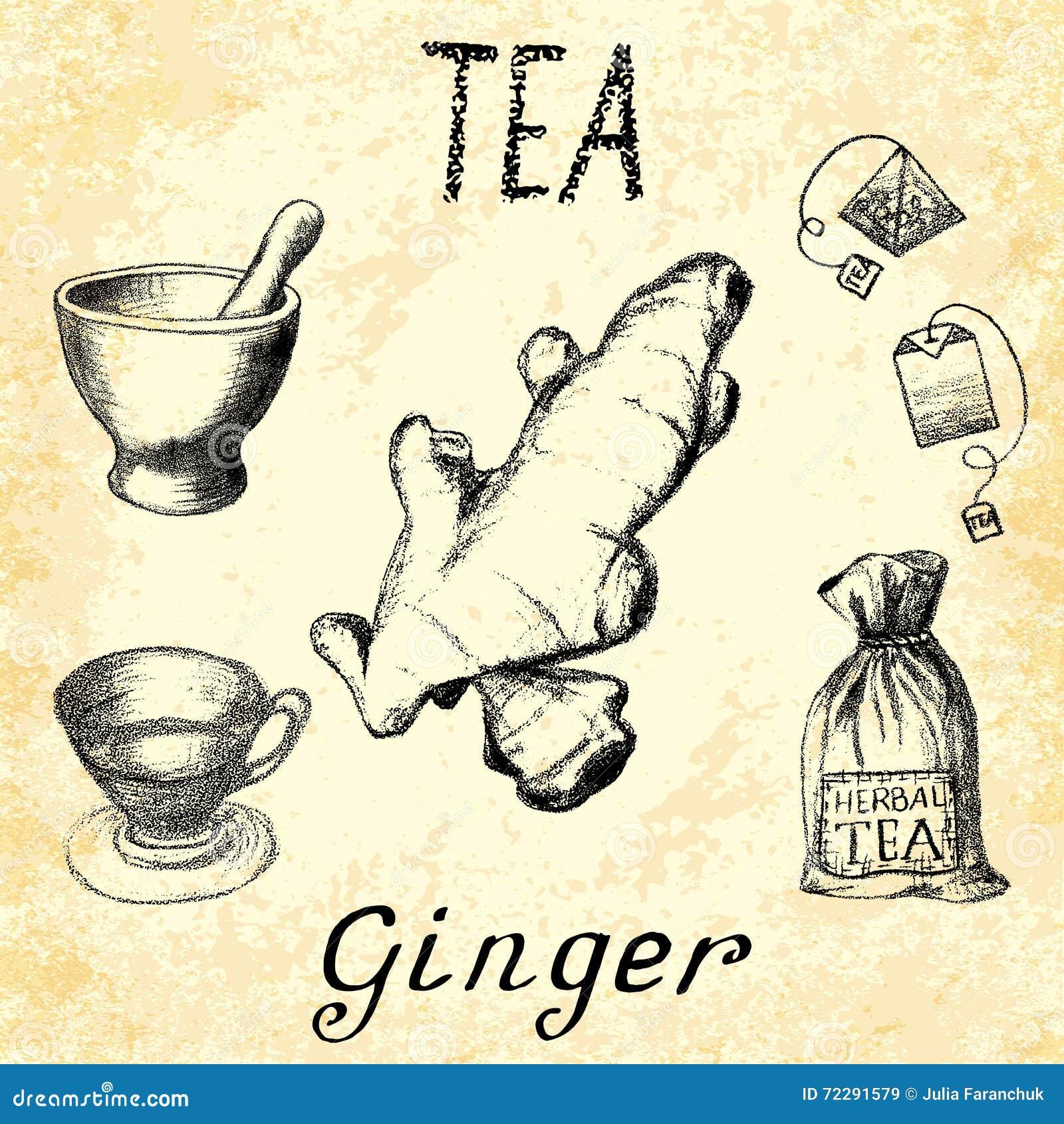 Download Чай имбиря травяной Комплект элементов на чертежах карандаша руки основы Иллюстрация штока - иллюстрации насчитывающей имбирь, здорово: 72291579