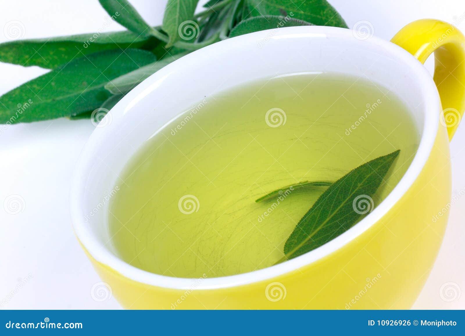 чай шалфея завода