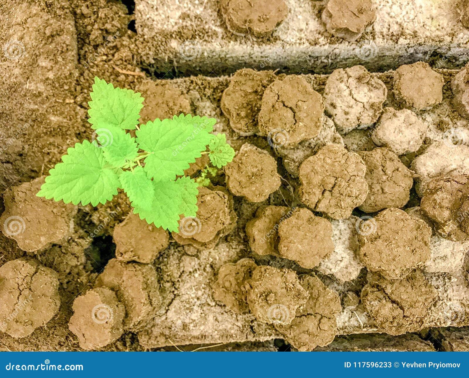 Часть треснутой земли с зелеными leavs