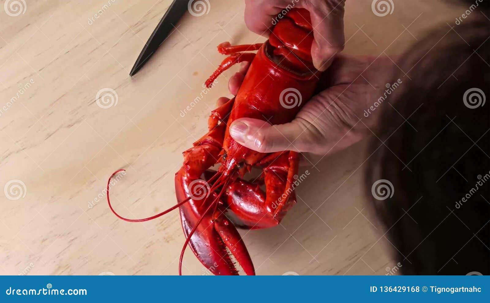 Человек держа кипеть омара на руках